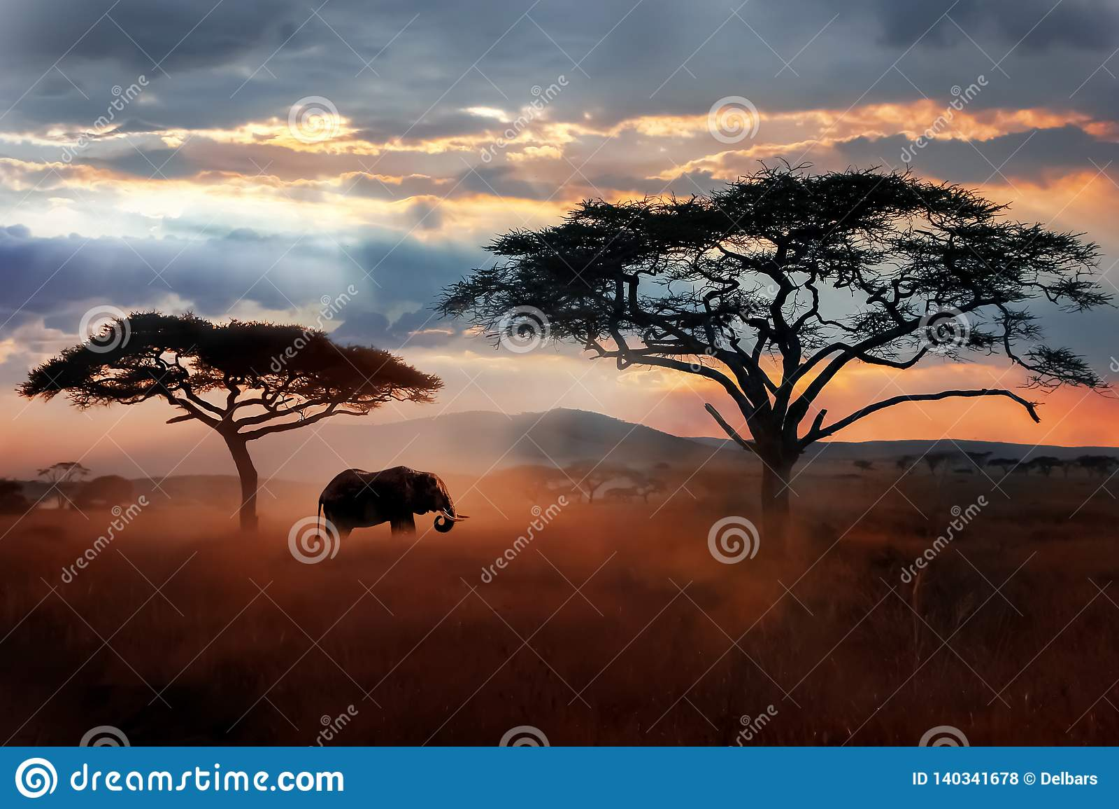 在大草原的狂放的非洲大象 Serengeti国家公园 坦桑尼亚的野生生物