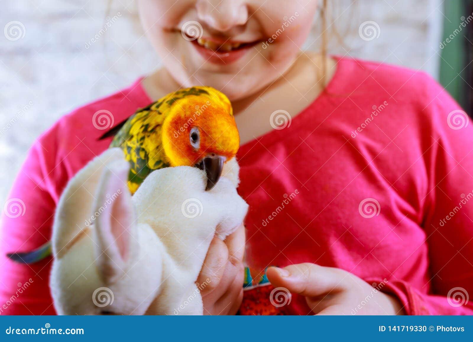 在女孩旁边的波浪鹦鹉 黄绿色鹦鹉