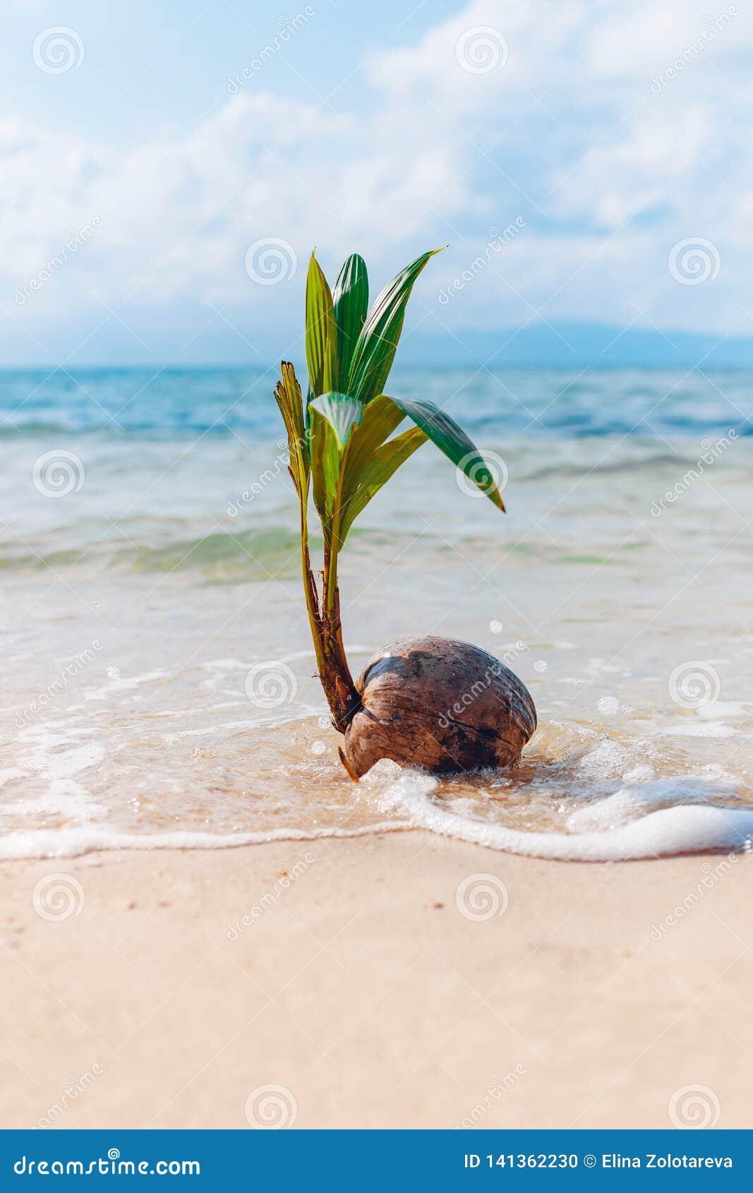 在沙滩的增长的椰子与波浪