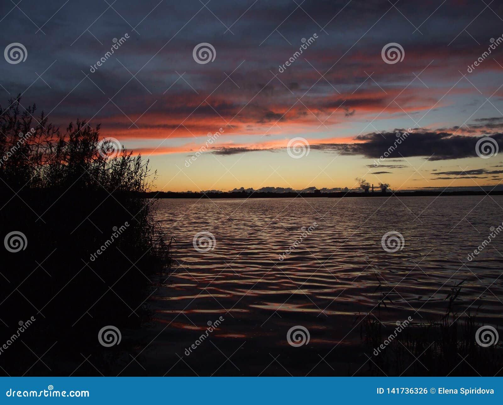 在湖和芦苇的日落在背景遥远的岸