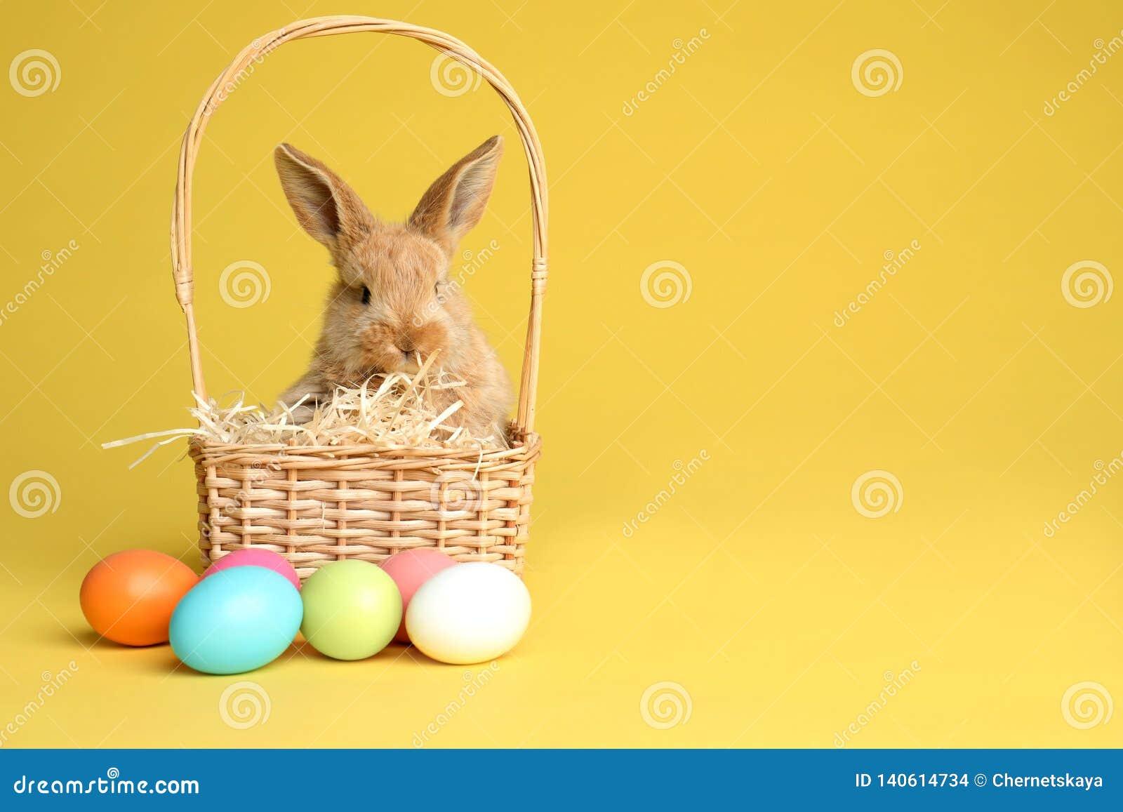 在柳条筐的可爱的毛茸的复活节兔子和在颜色背景的被洗染的鸡蛋