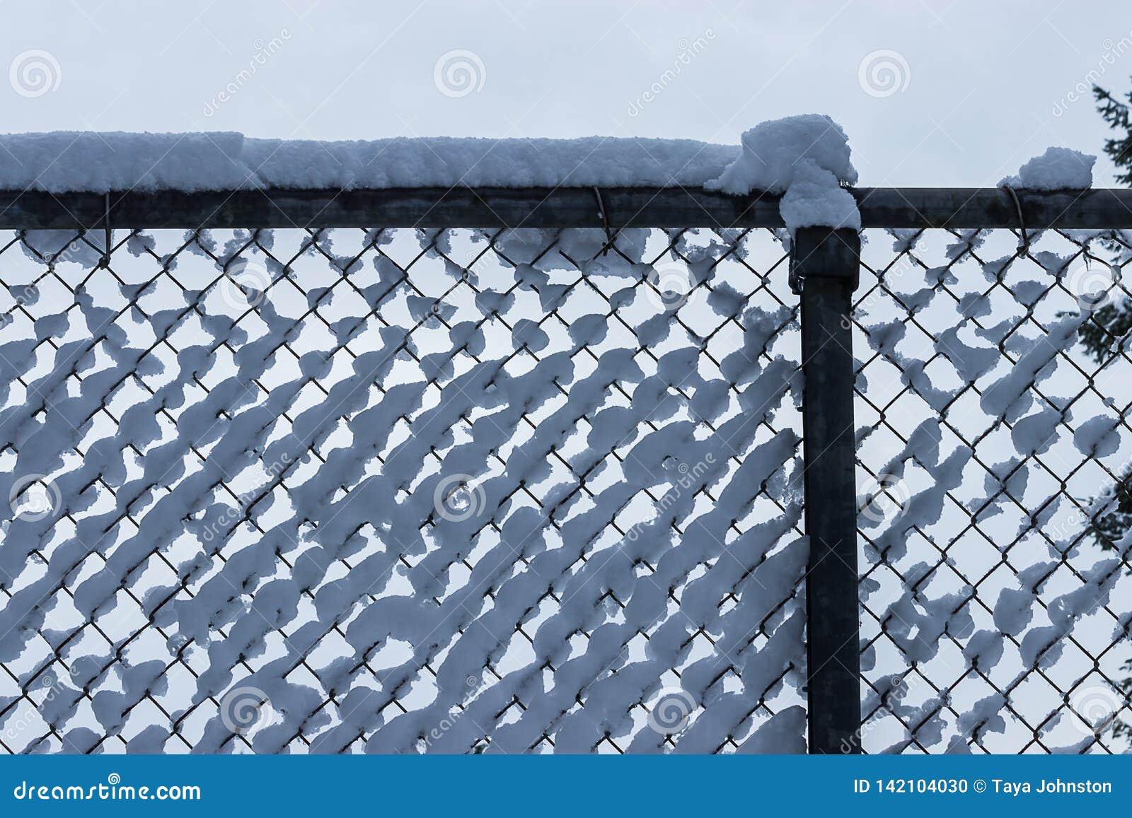 在篱芭蓬松白雪收集的丛