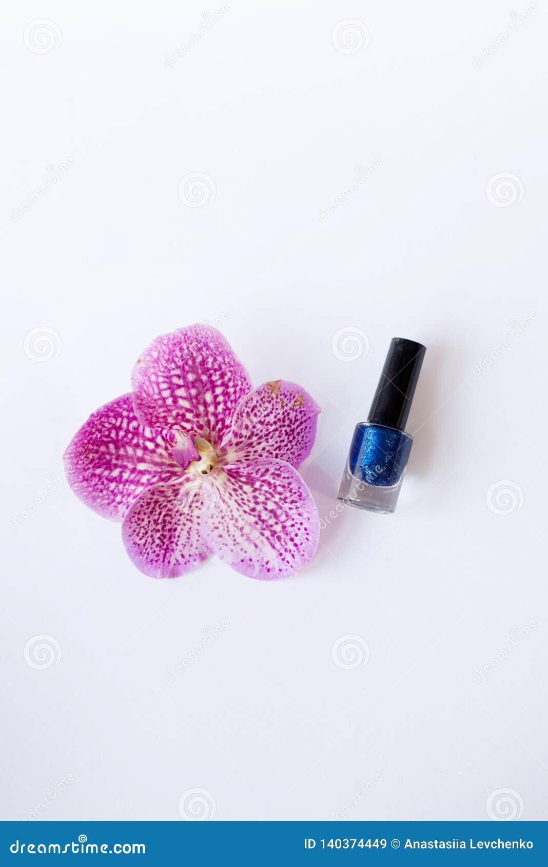 在美丽的桃红色花附近的蓝色指甲油立场