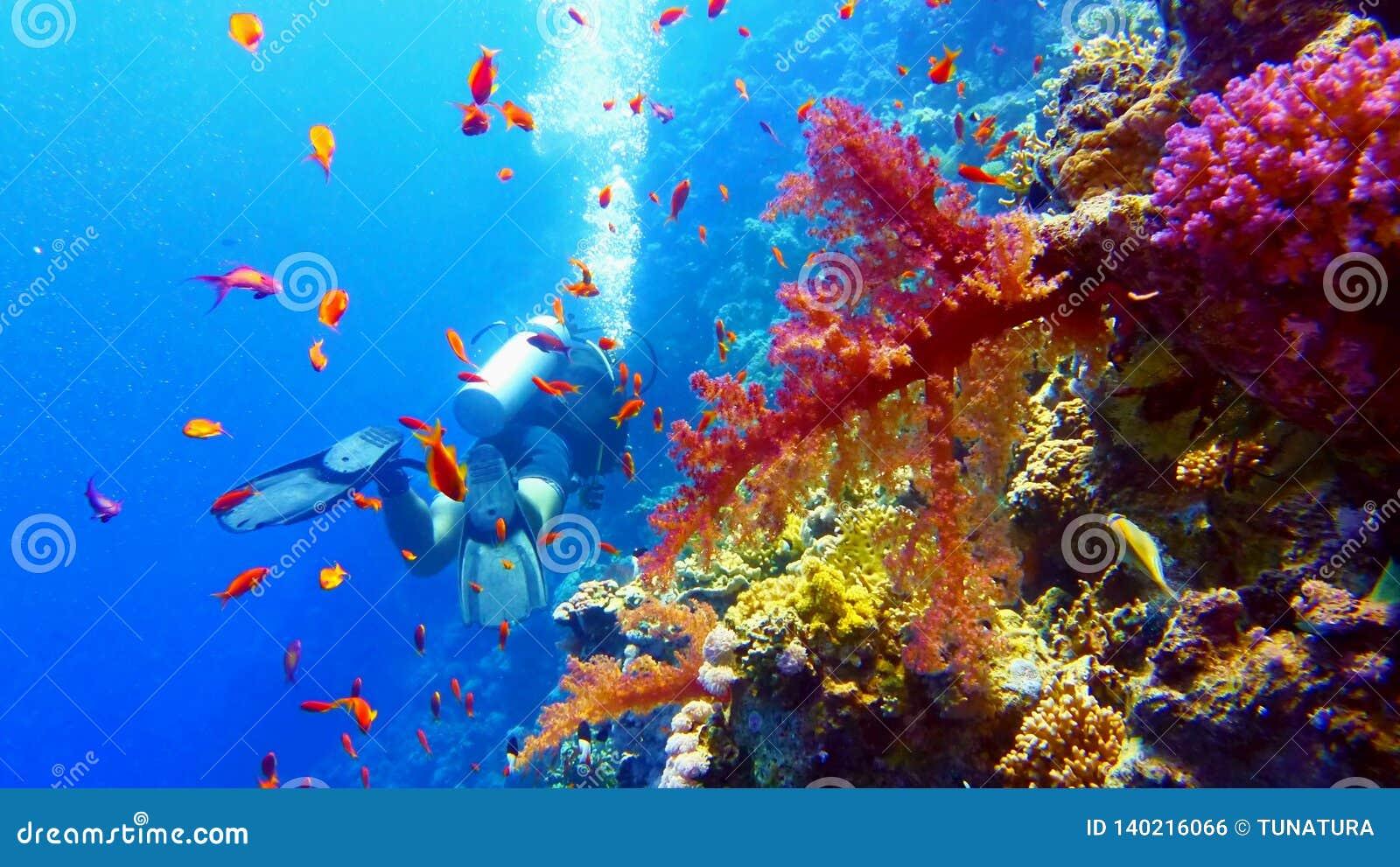 在美丽的珊瑚礁附近的轻潜水员