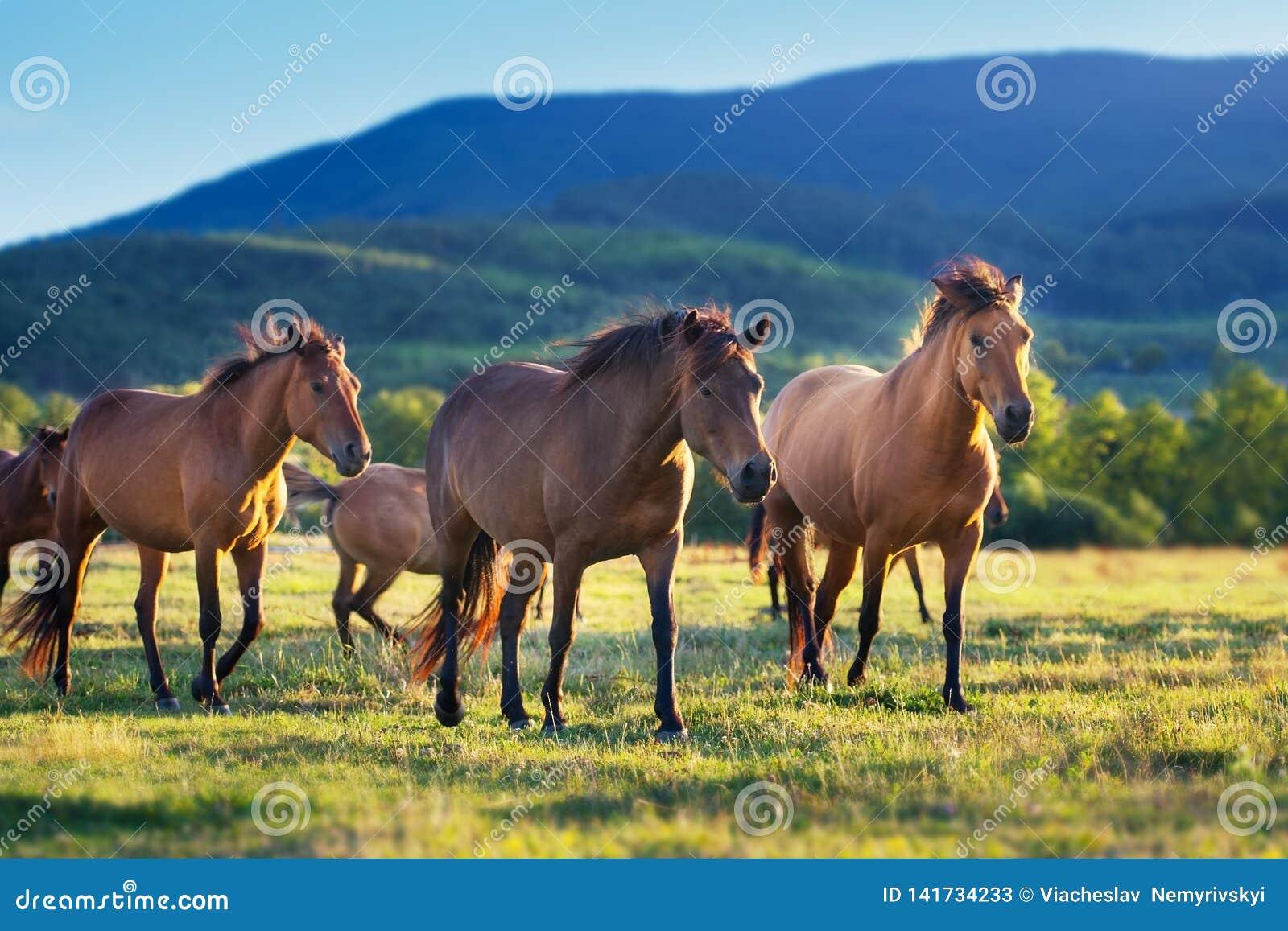 在牧群的马