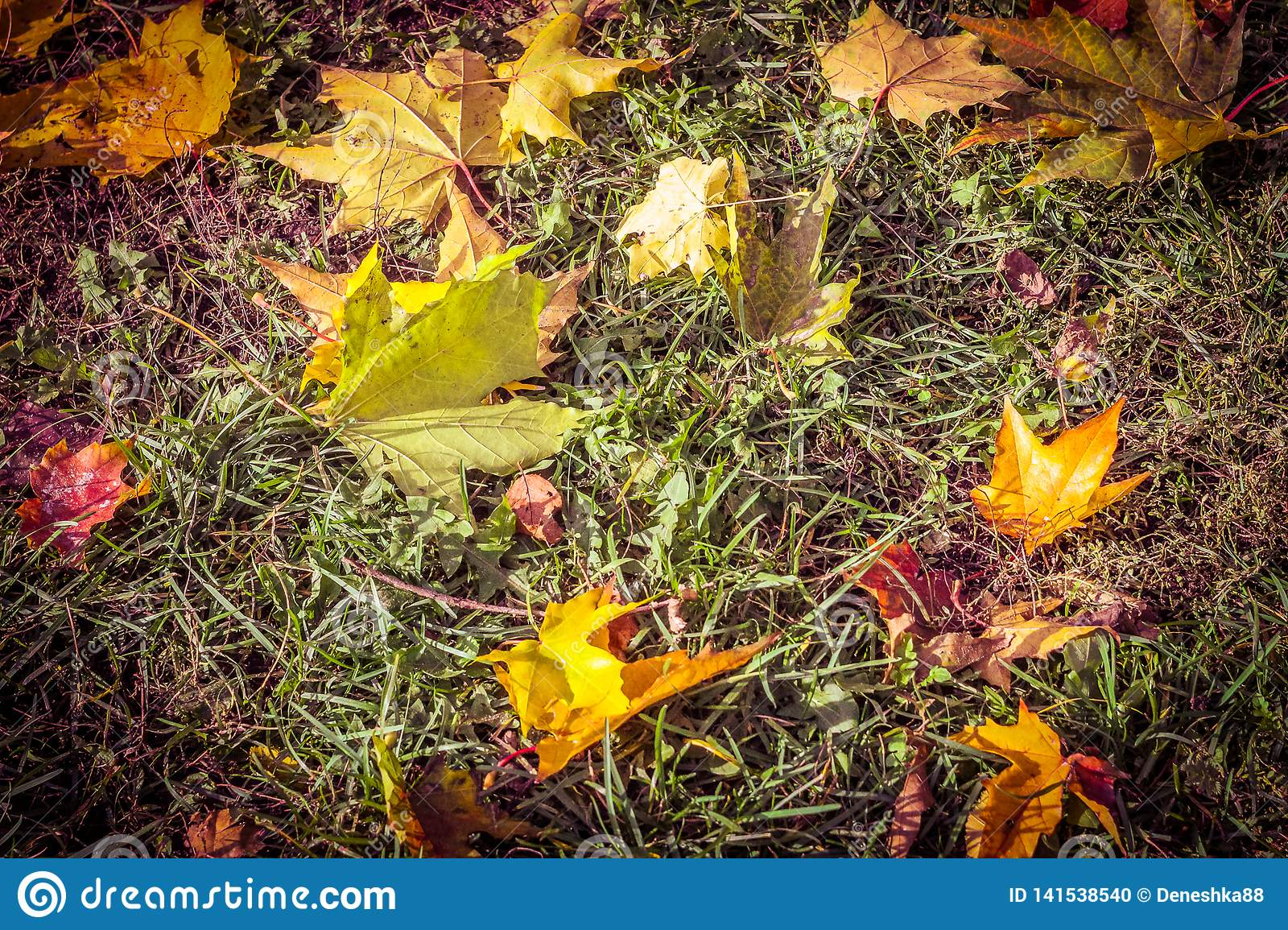 在草的秋叶,五颜六色的叶子,落叶