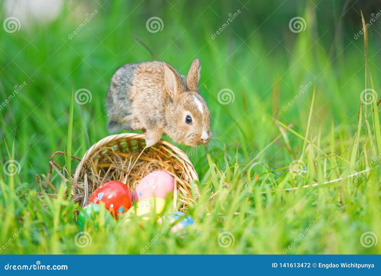 在草甸和一点兔子的五颜六色的鸡蛋在晴朗篮子巢的自然跳跃