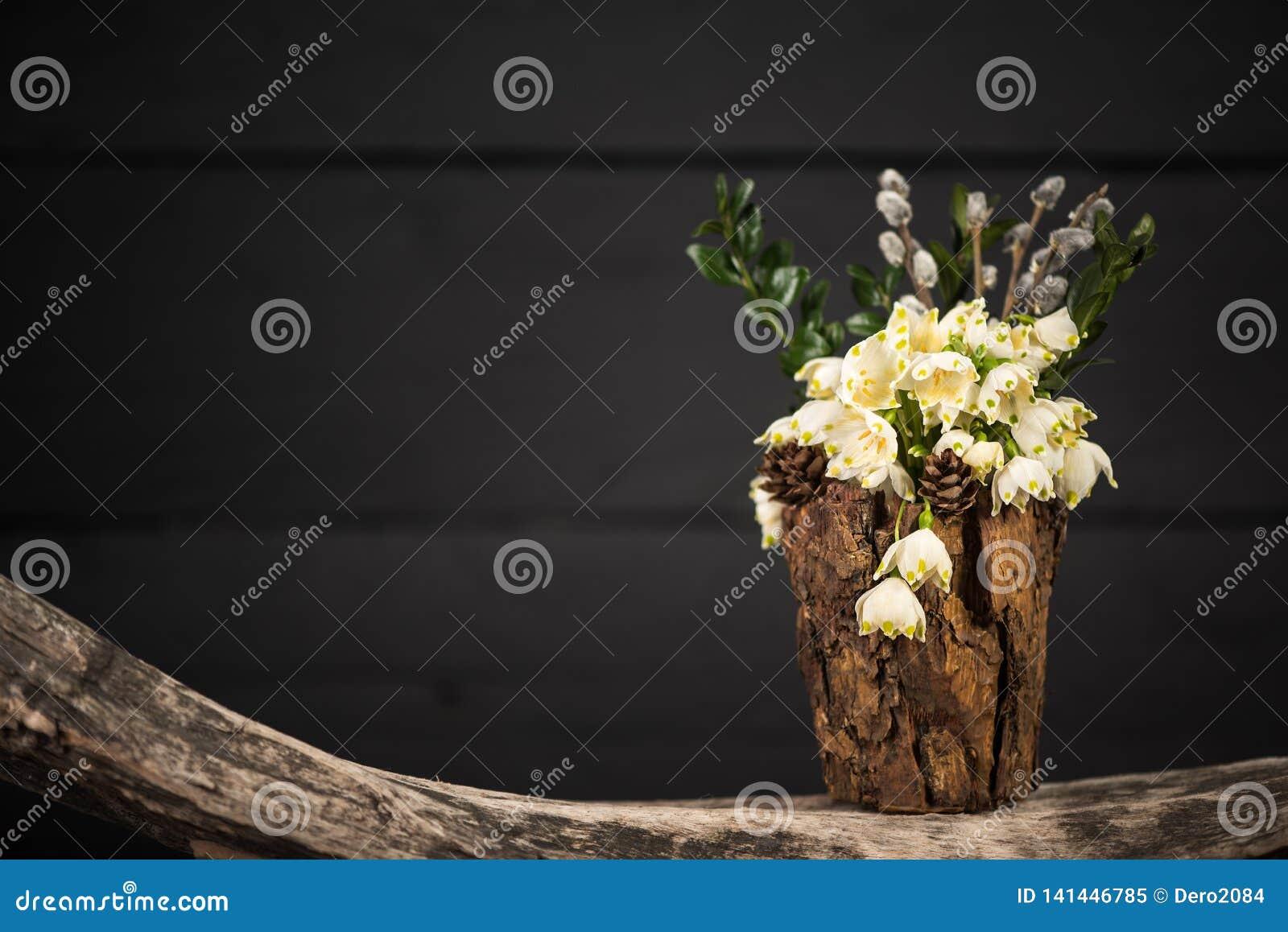 在装饰花瓶的花 Leucojum vernum是第一春天雪花 国际妇女天题材