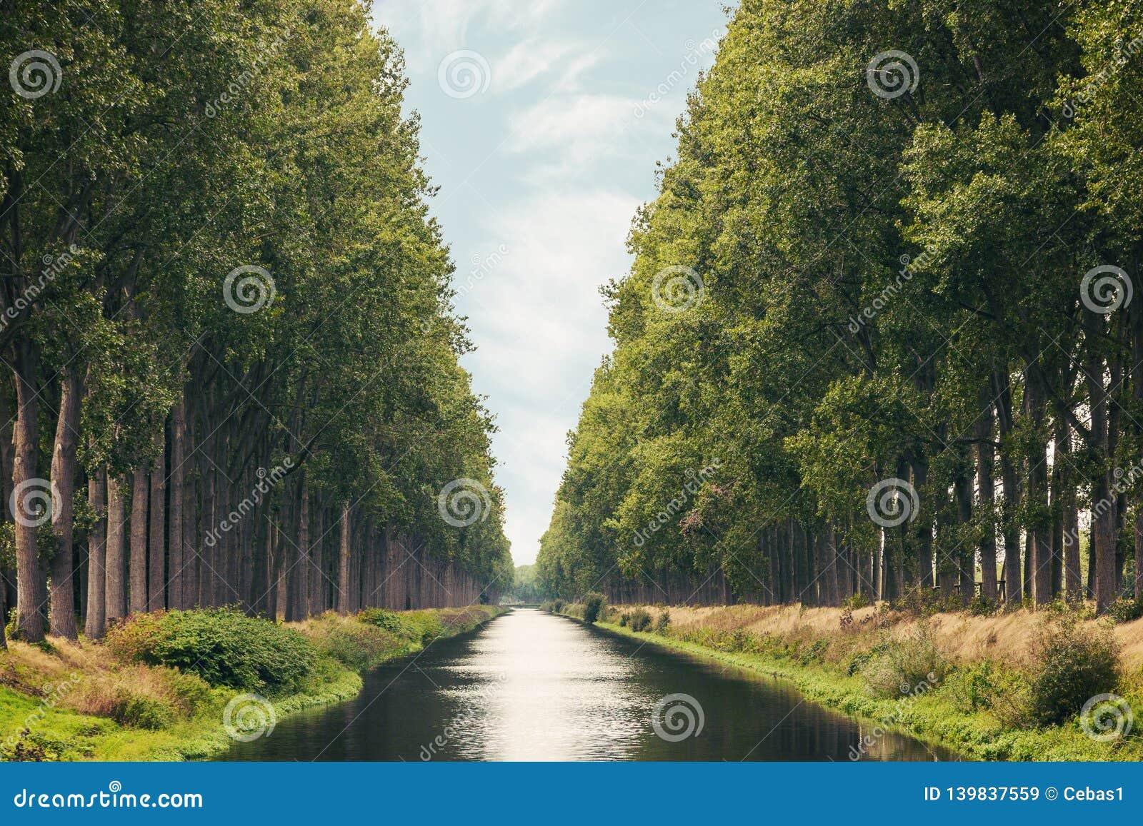 在西弗拉芒省比利时省的达默运河在夏天