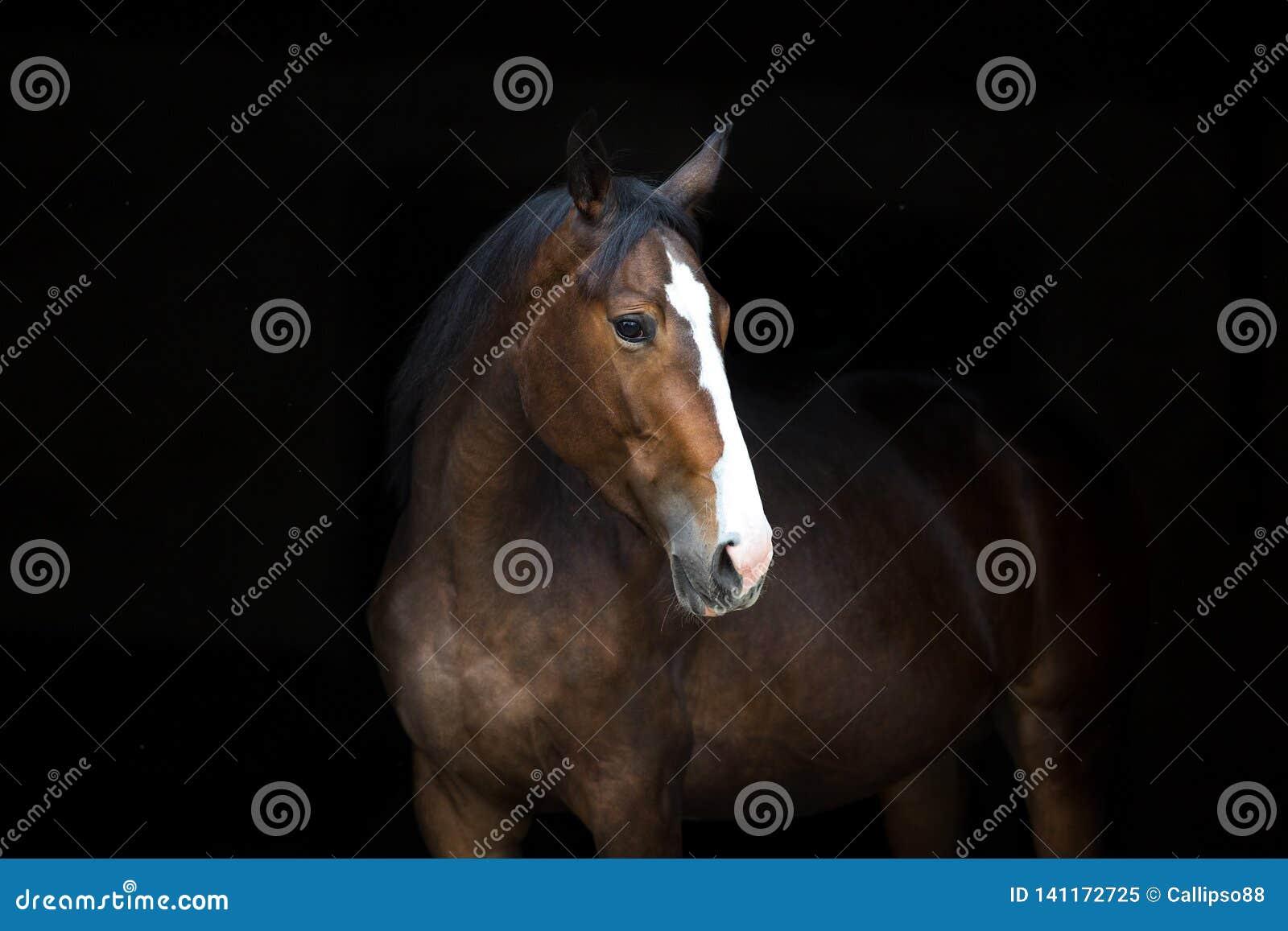在黑色的马画象