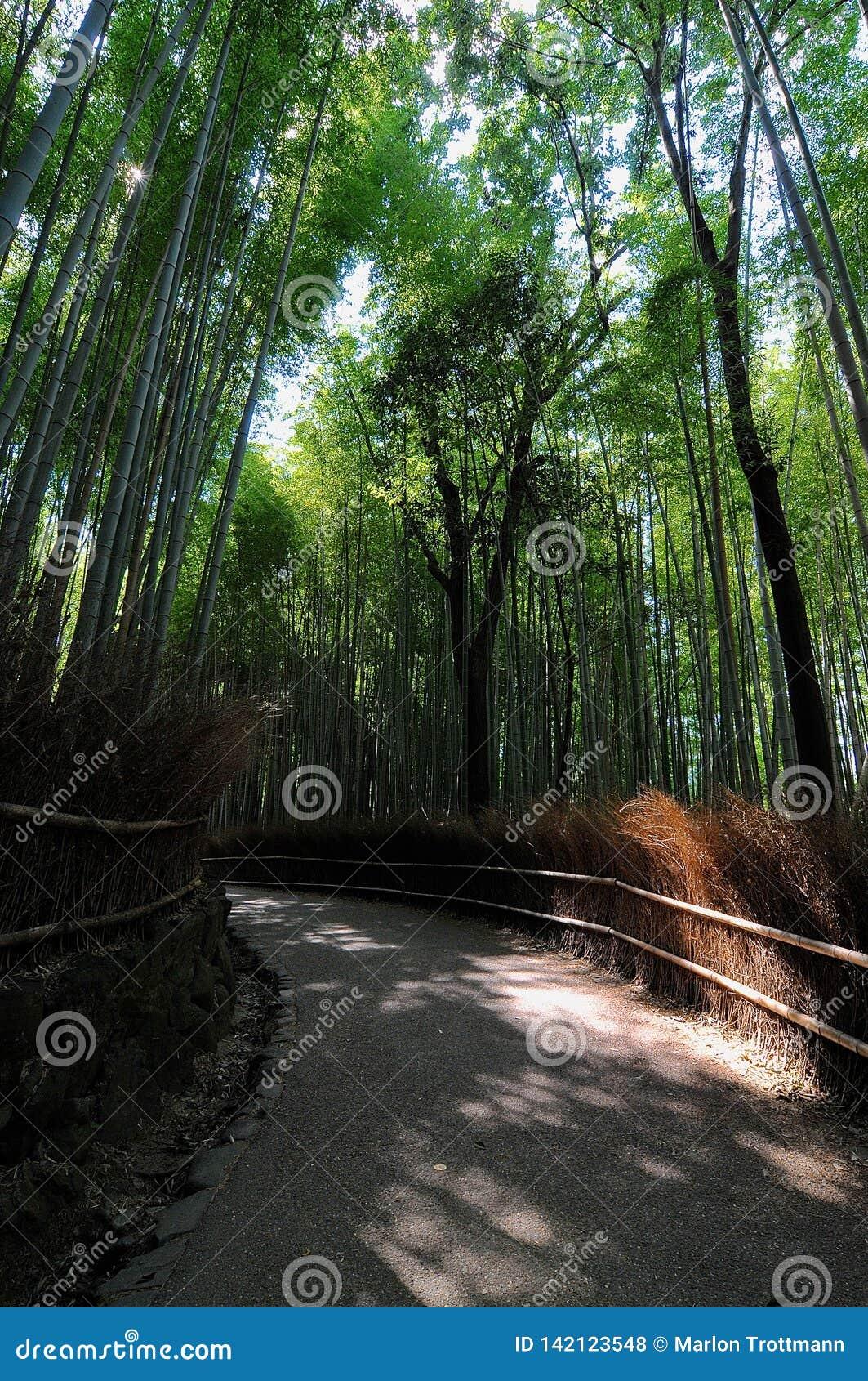 在Arashiyama竹森林的走道在日本