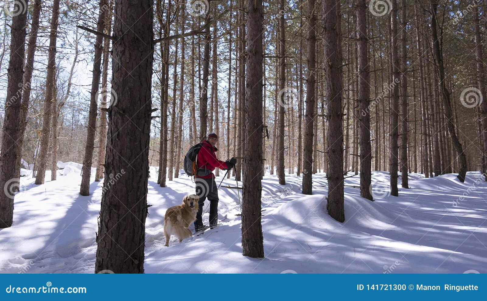 北欧滑雪者在有他的狗的森林里