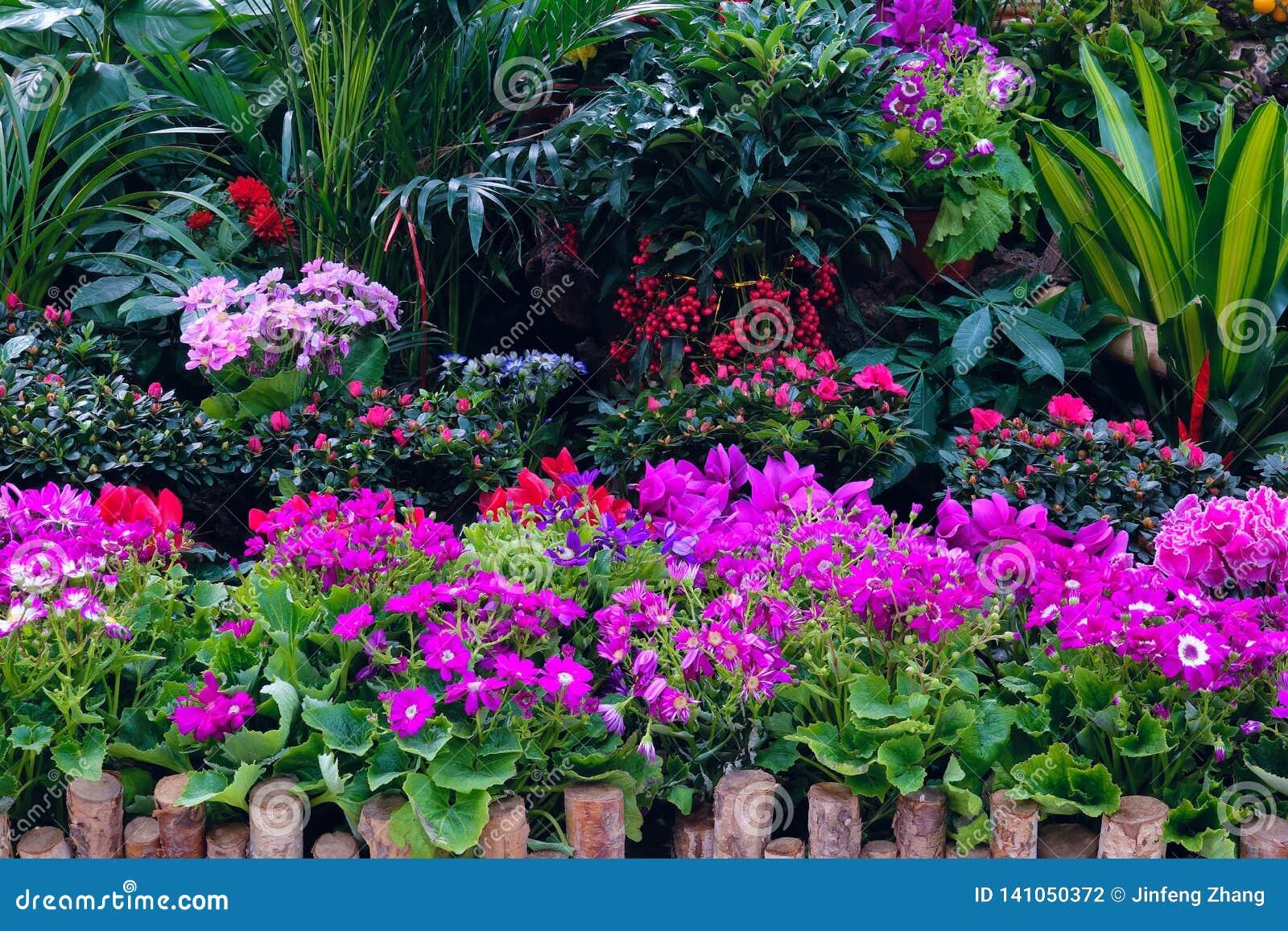 分配为花坛的区域