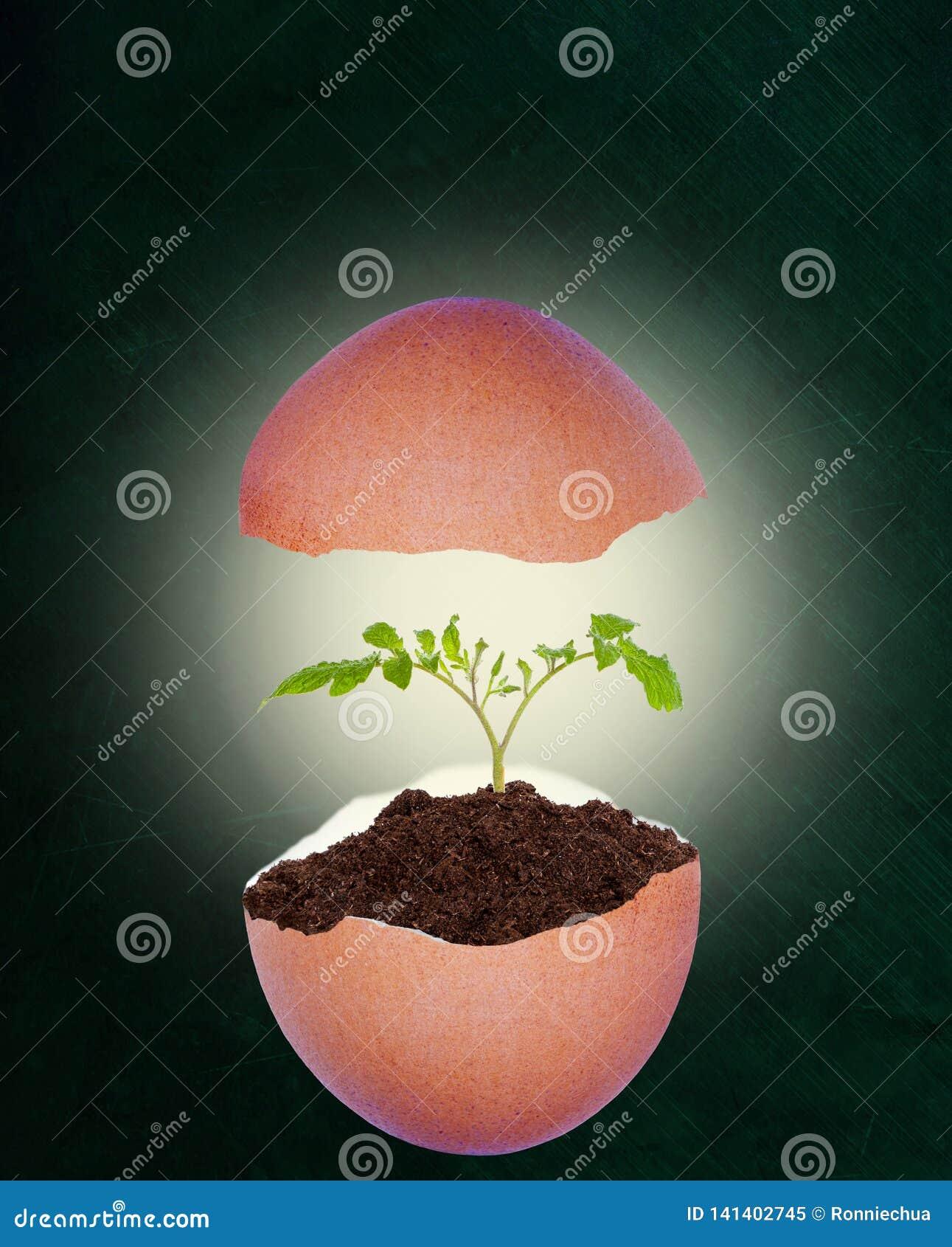 Łamany Eggshell Z dorośnięcie rośliną na Chalkboard tle i kopii przestrzeni