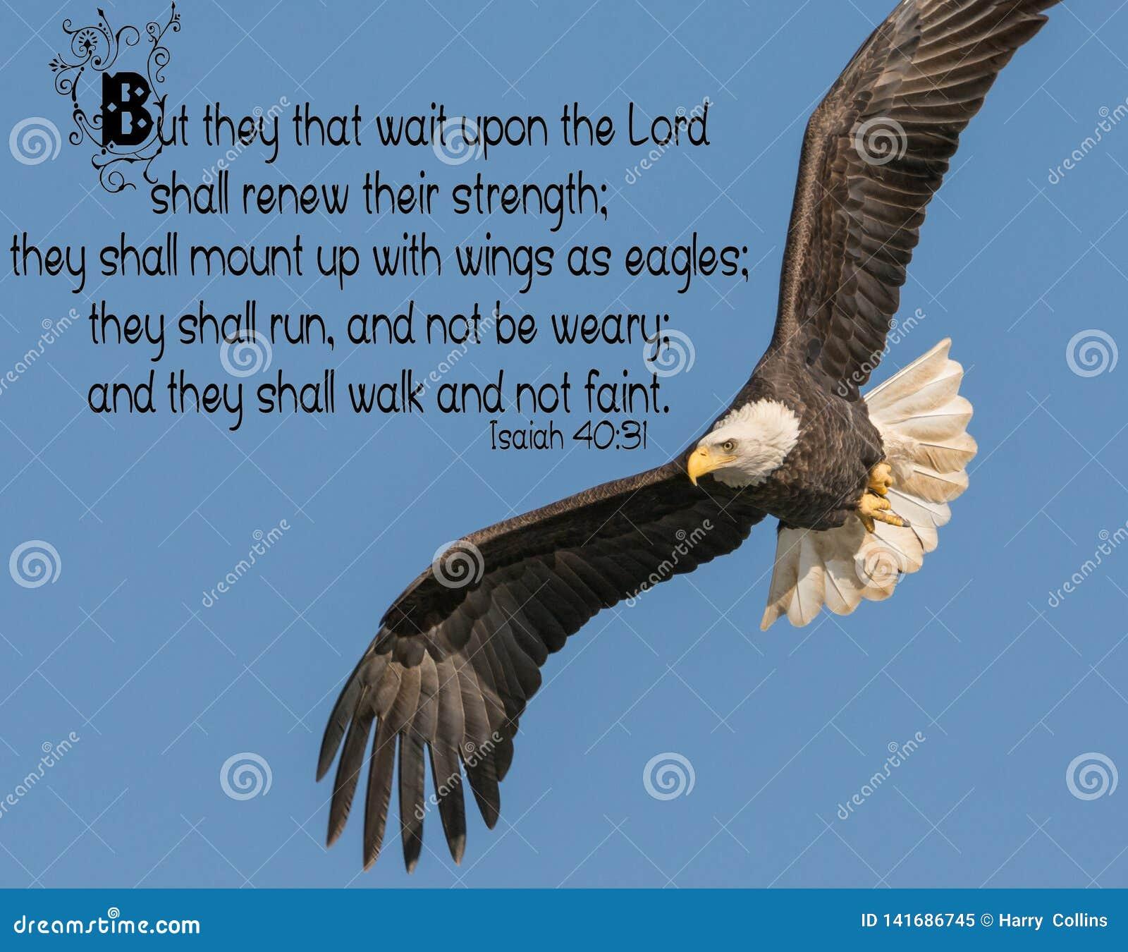 Łysego Eagle biblii werset