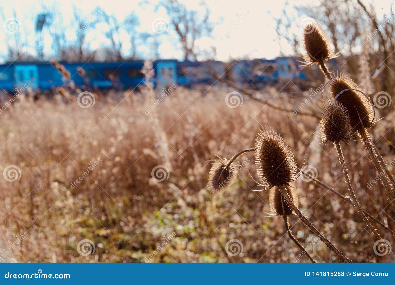 关闭在Blurred狂放的草甸和火车的起毛机