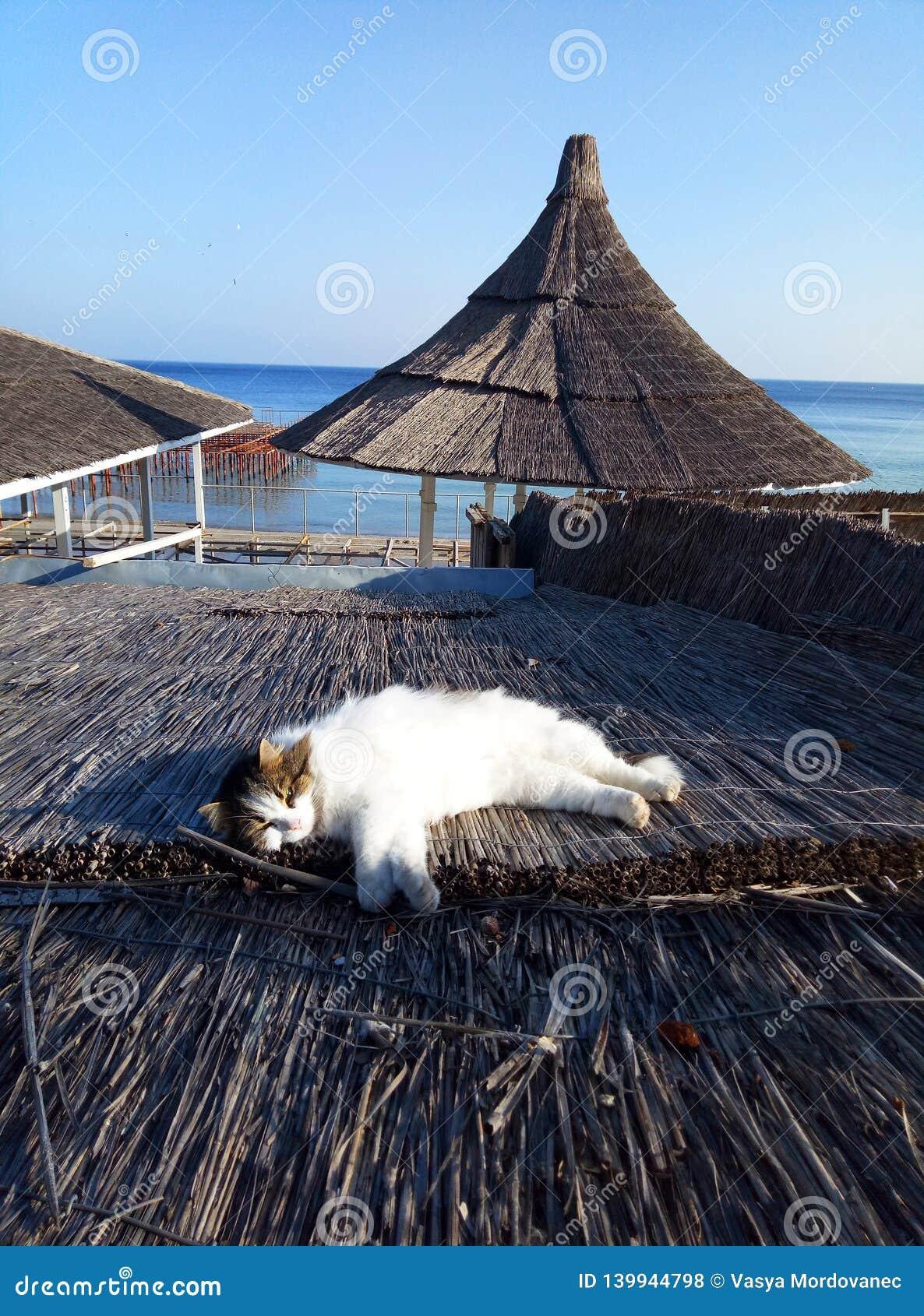 Śliczny kot kłaść na słomianym dachu