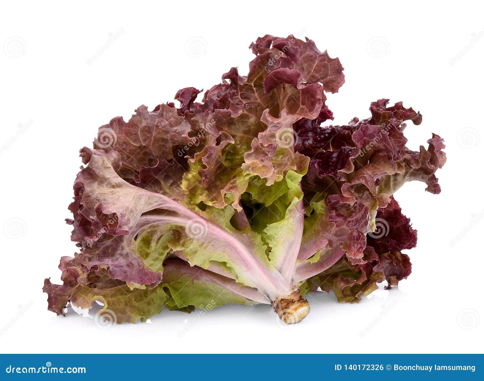Świeża czerwonego korala sałatka lub czerwieni sałata odizolowywająca na bielu