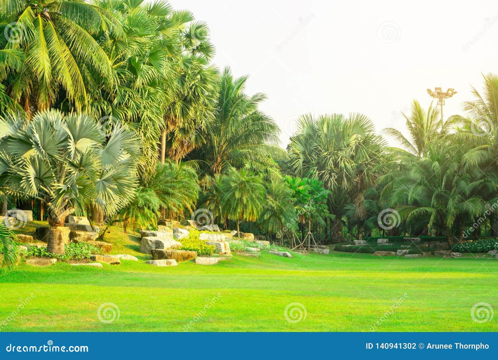 Świeży zielony Manila trawy jard, gładki gazon w piękni botaniczni drzewka palmowe uprawia ogródek, dobrzy opieka krajobrazy w ja