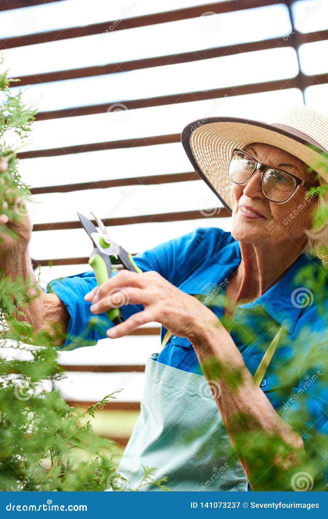 喜欢植物的资深妇女