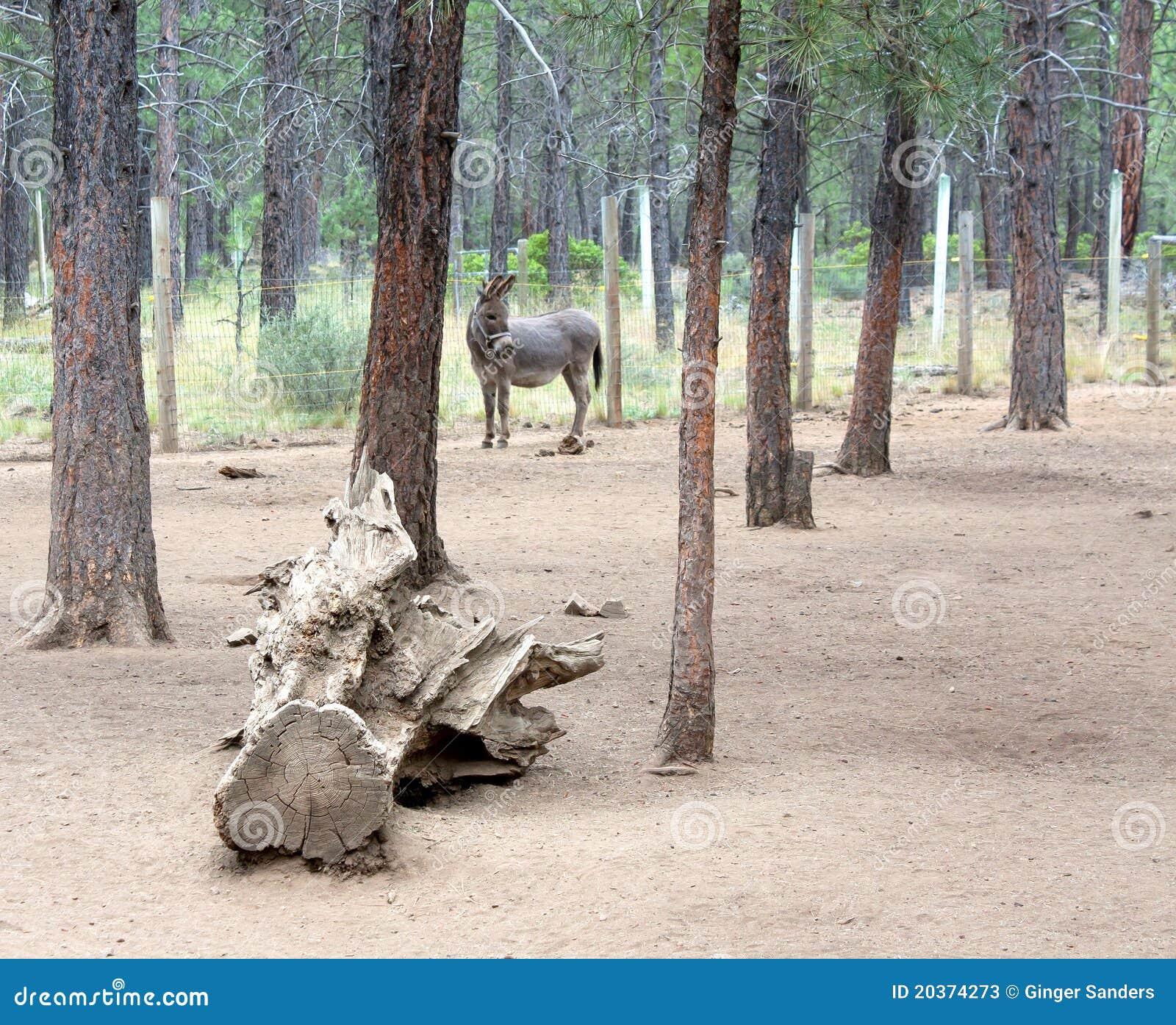 åsnaskog