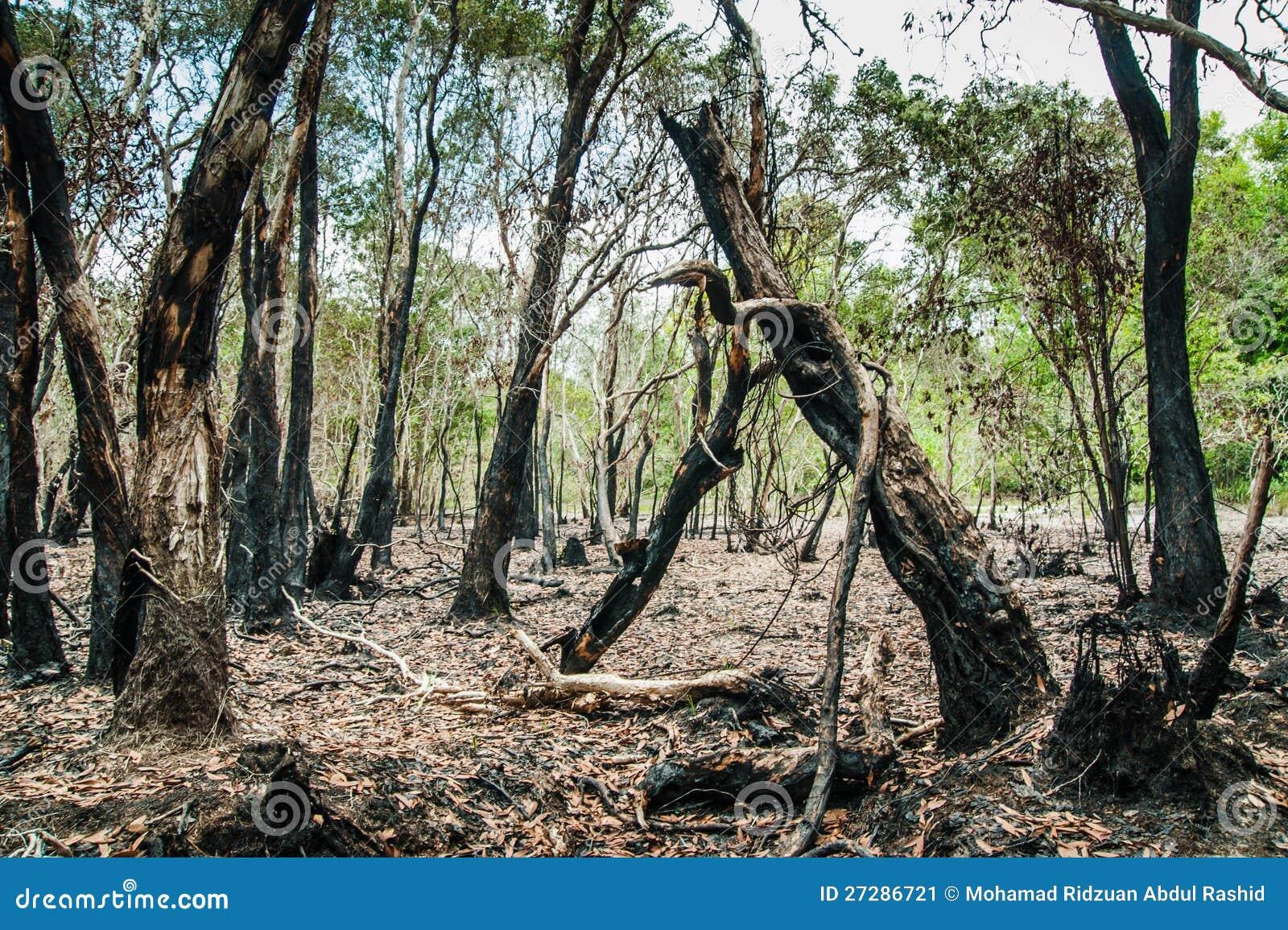 Återställa djungeln
