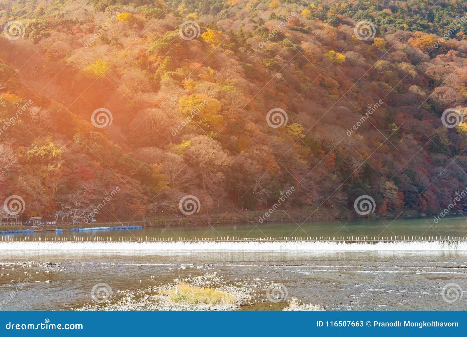 Åtskilligt färgträd för höstsäsong på bergflodframdel