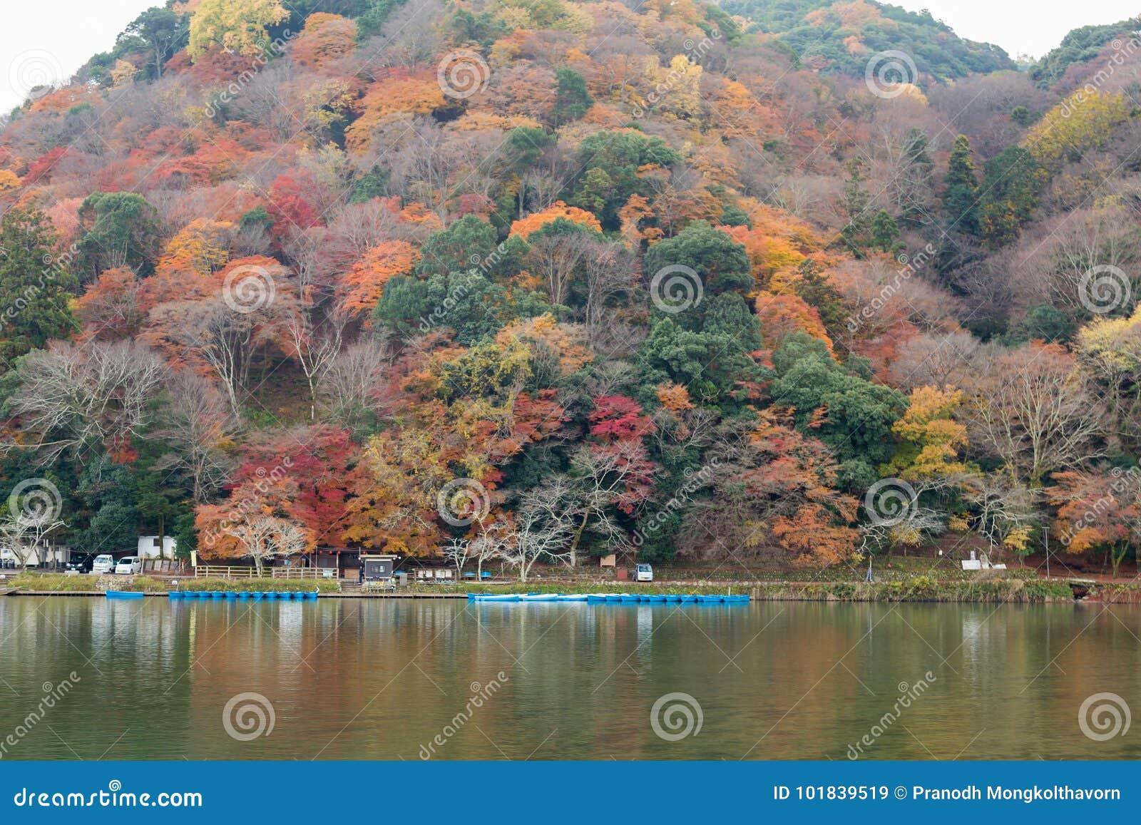 Åtskilligt färgträd i bergvattenframdel i Kyoto Japan