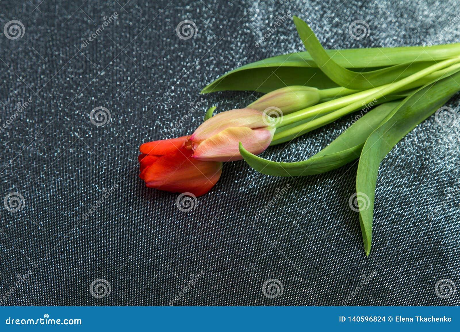 桃红色郁金香的春天嫩芽与绿色叶子的反对背景