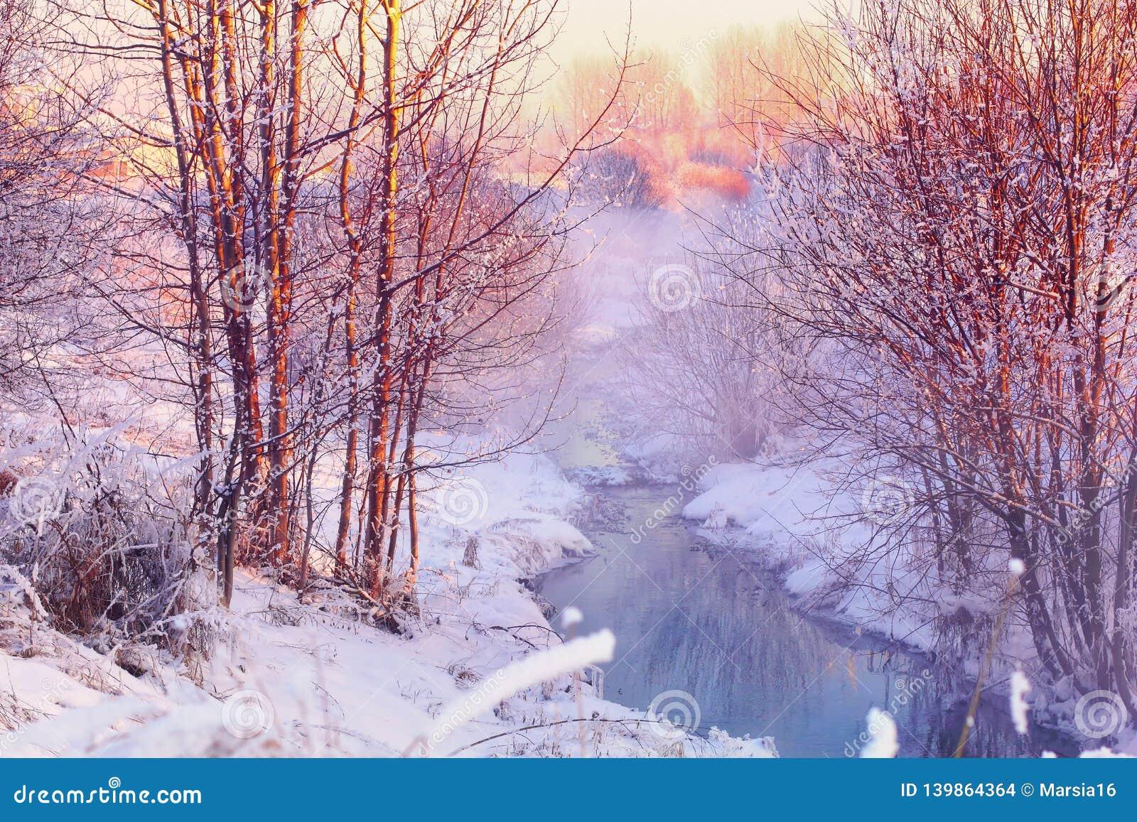 森林小河在冬天森林里