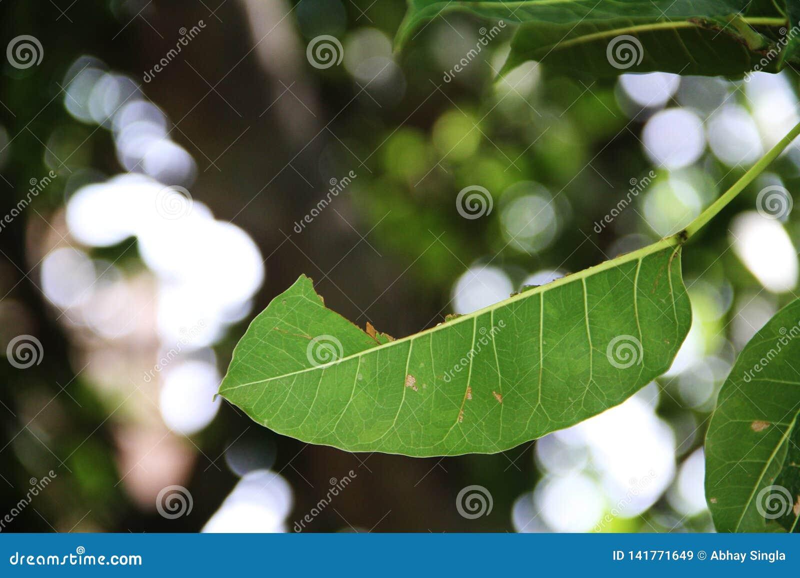 植物绿色半事假