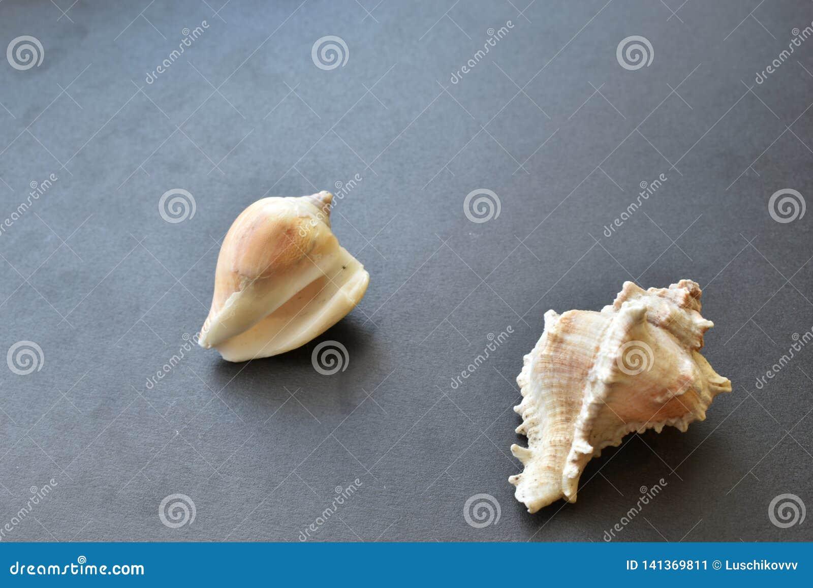 海壳和壳在黑背景