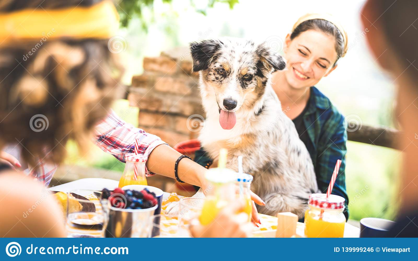 愉快的朋友吃健康pic nic早餐在乡下与获得逗人喜爱的狗的农厂家的年轻人millennials乐趣