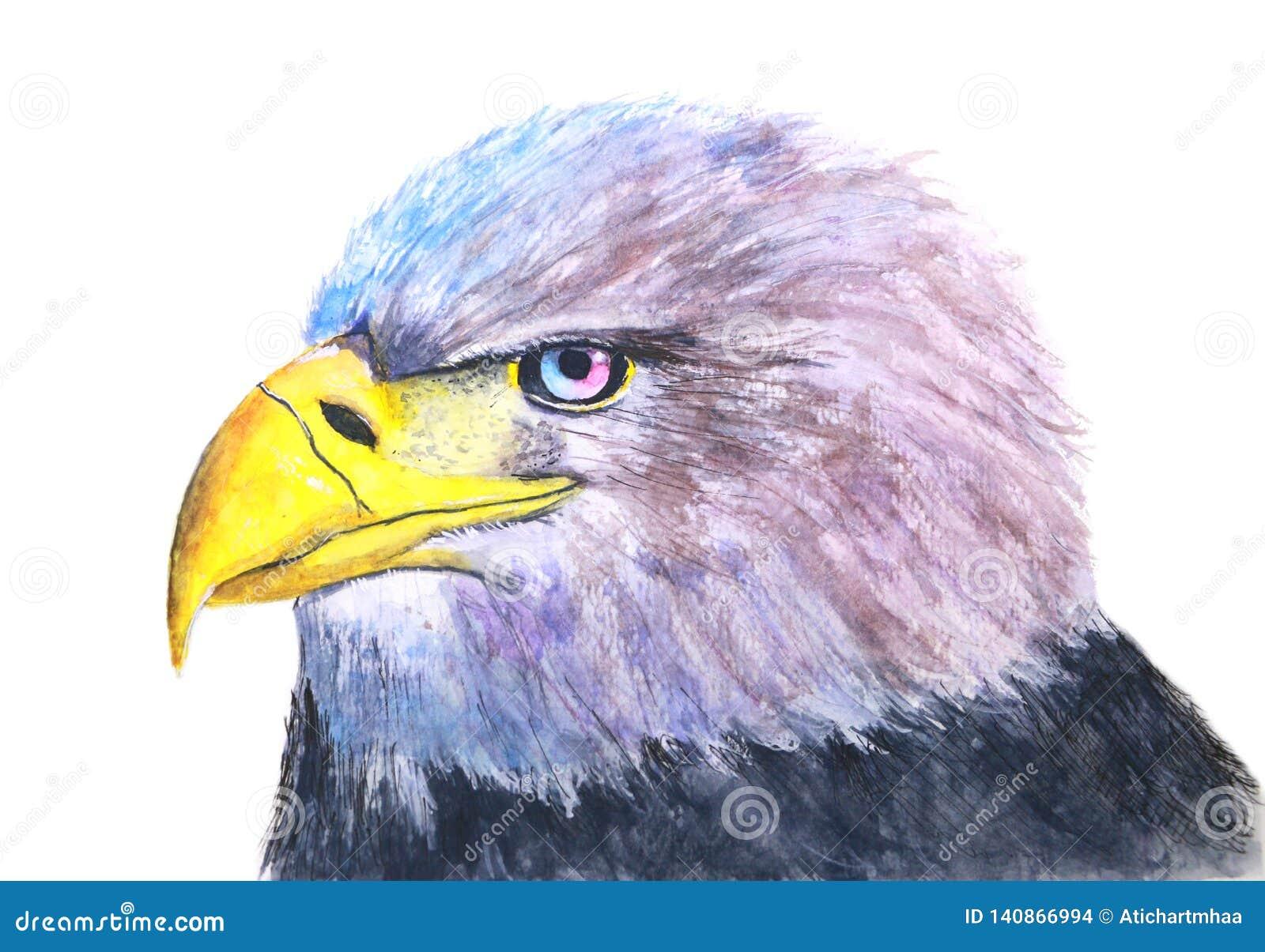 手拉的水彩一只鸟老鹰的被隔绝的例证在白色背景中