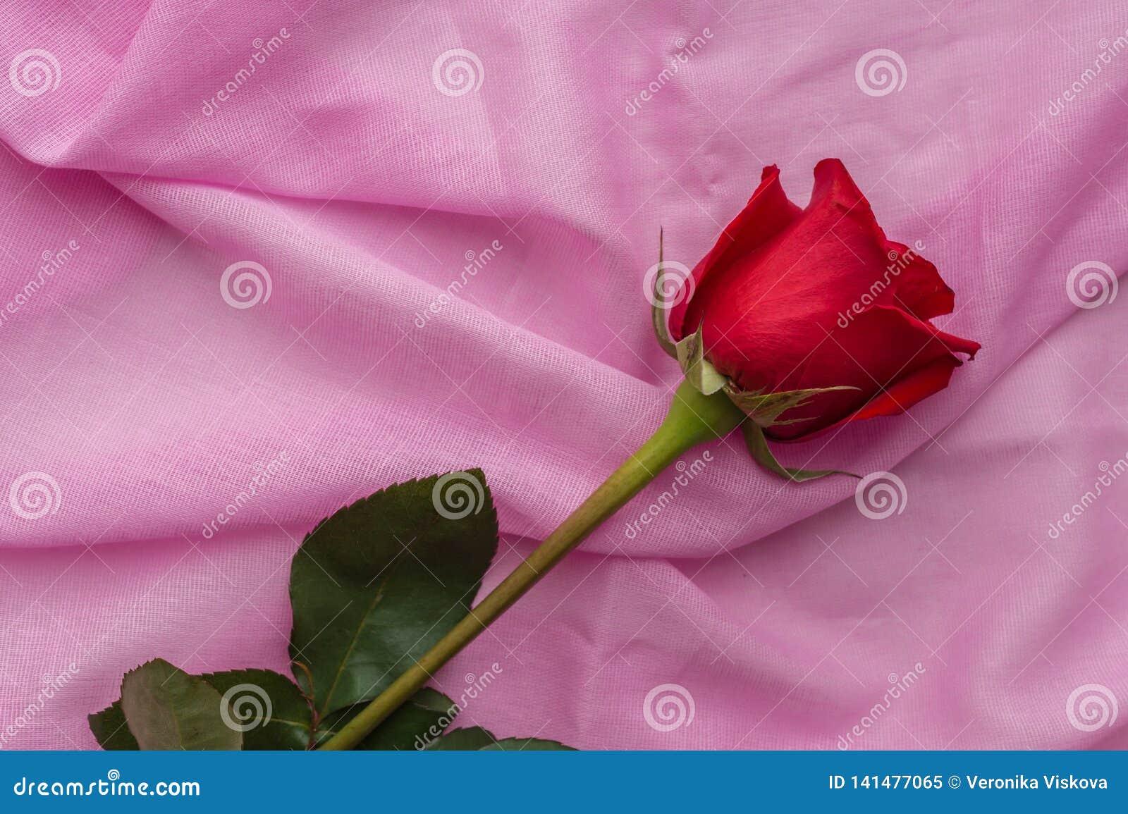 红色玫瑰花蕾在棉织物粉红彩笔背景说谎  情人节,母亲节,妇女的天概念