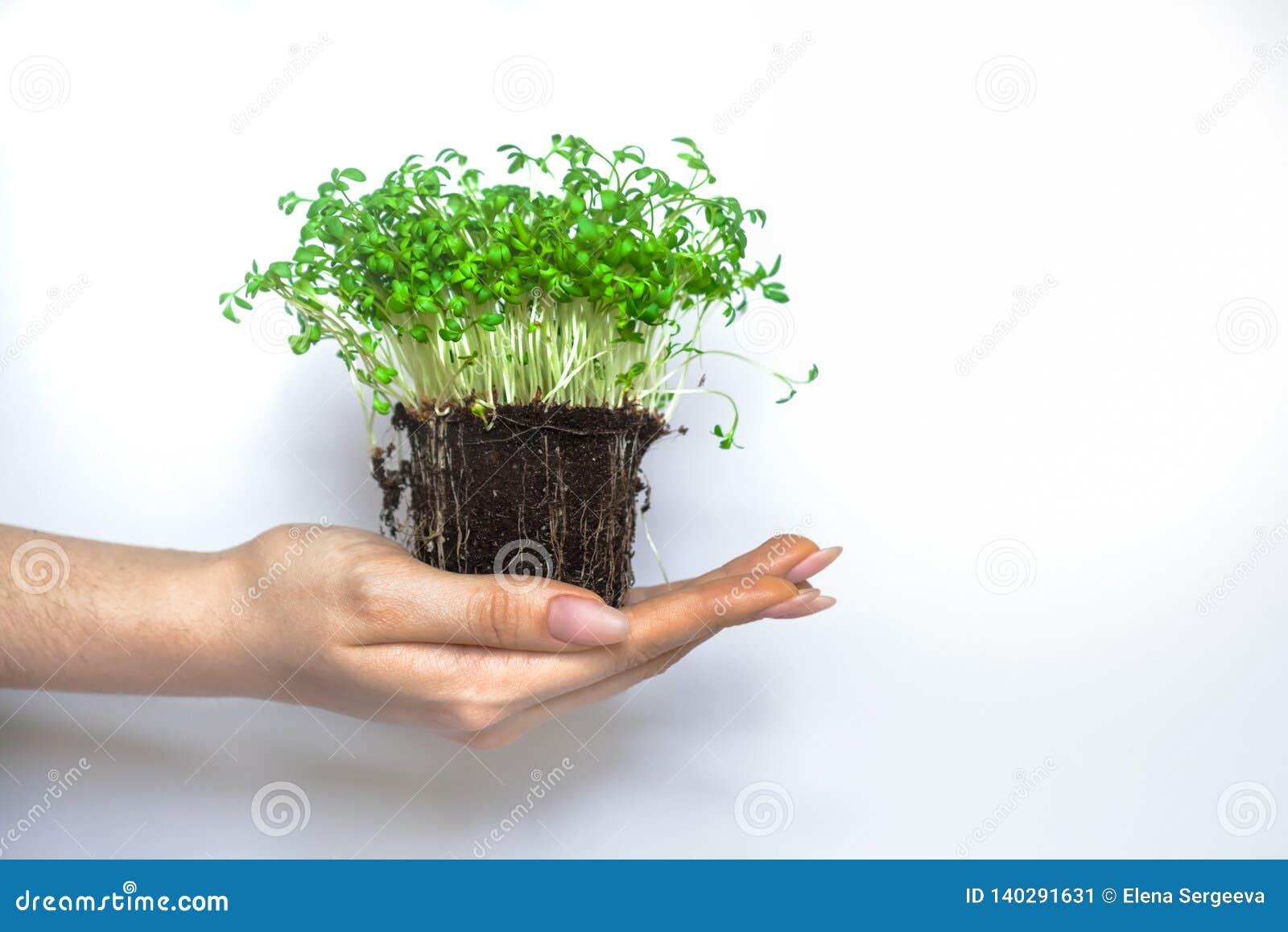 绿色植物新的喷口eco