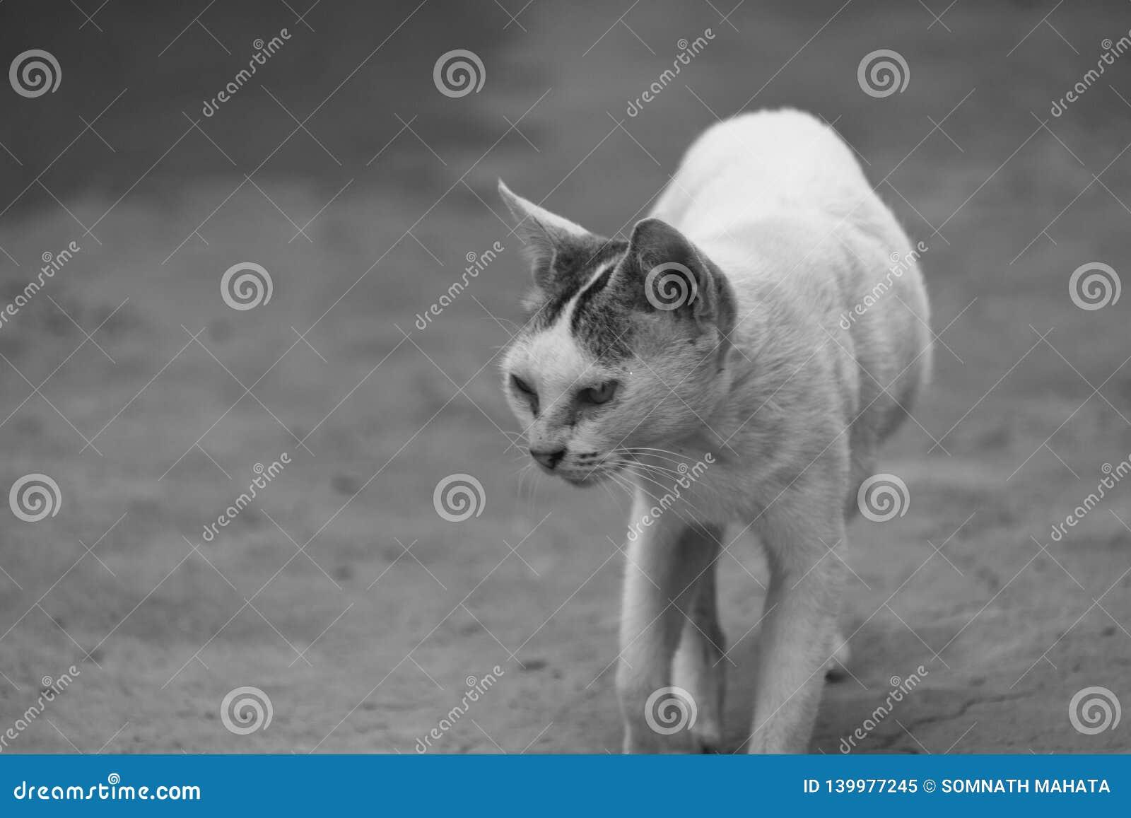 猫在一条农村道路走