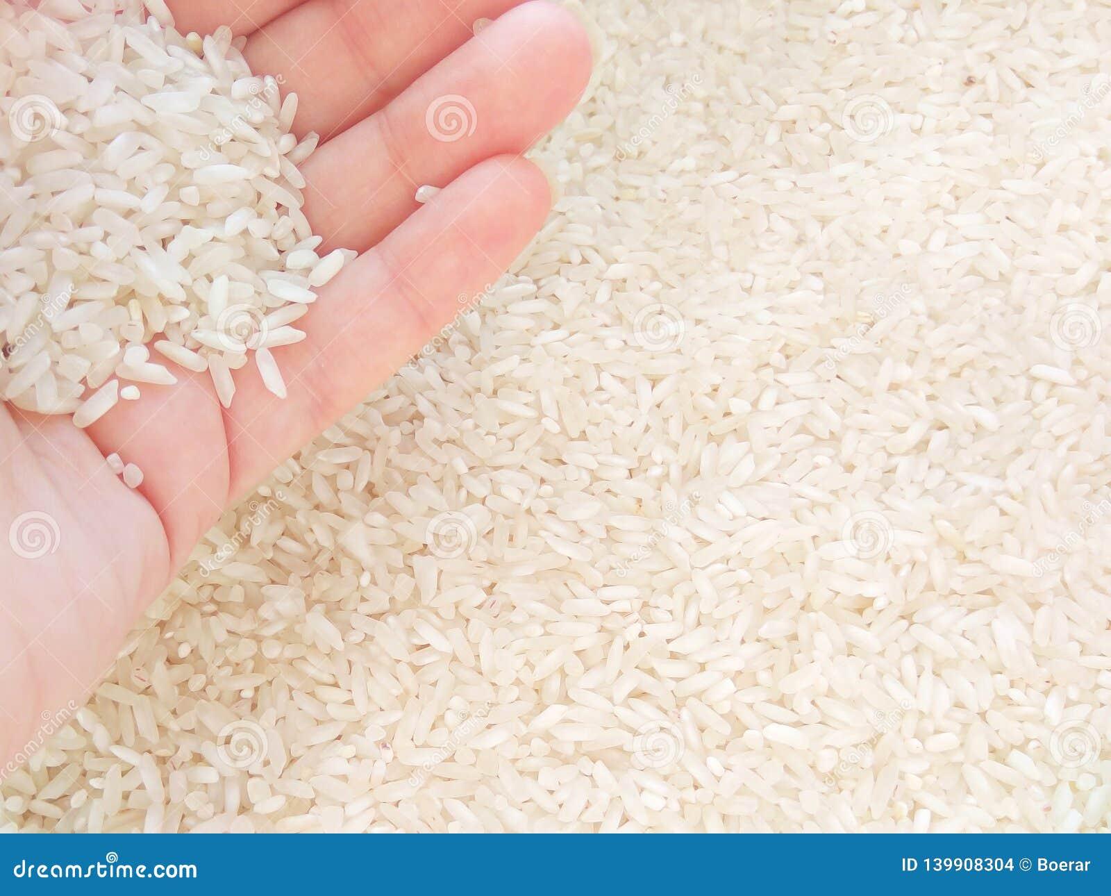 白米在手中在轻的背景