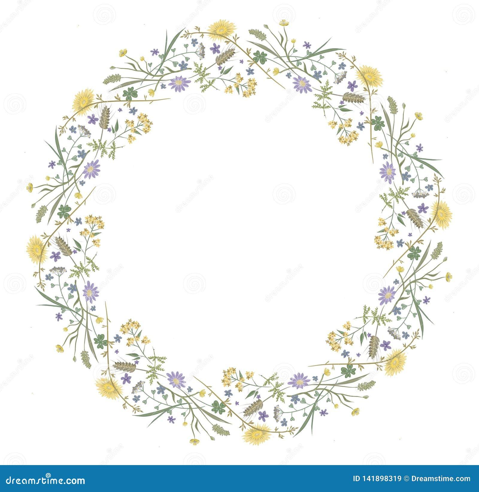 花反弹花卉圆的框架自然