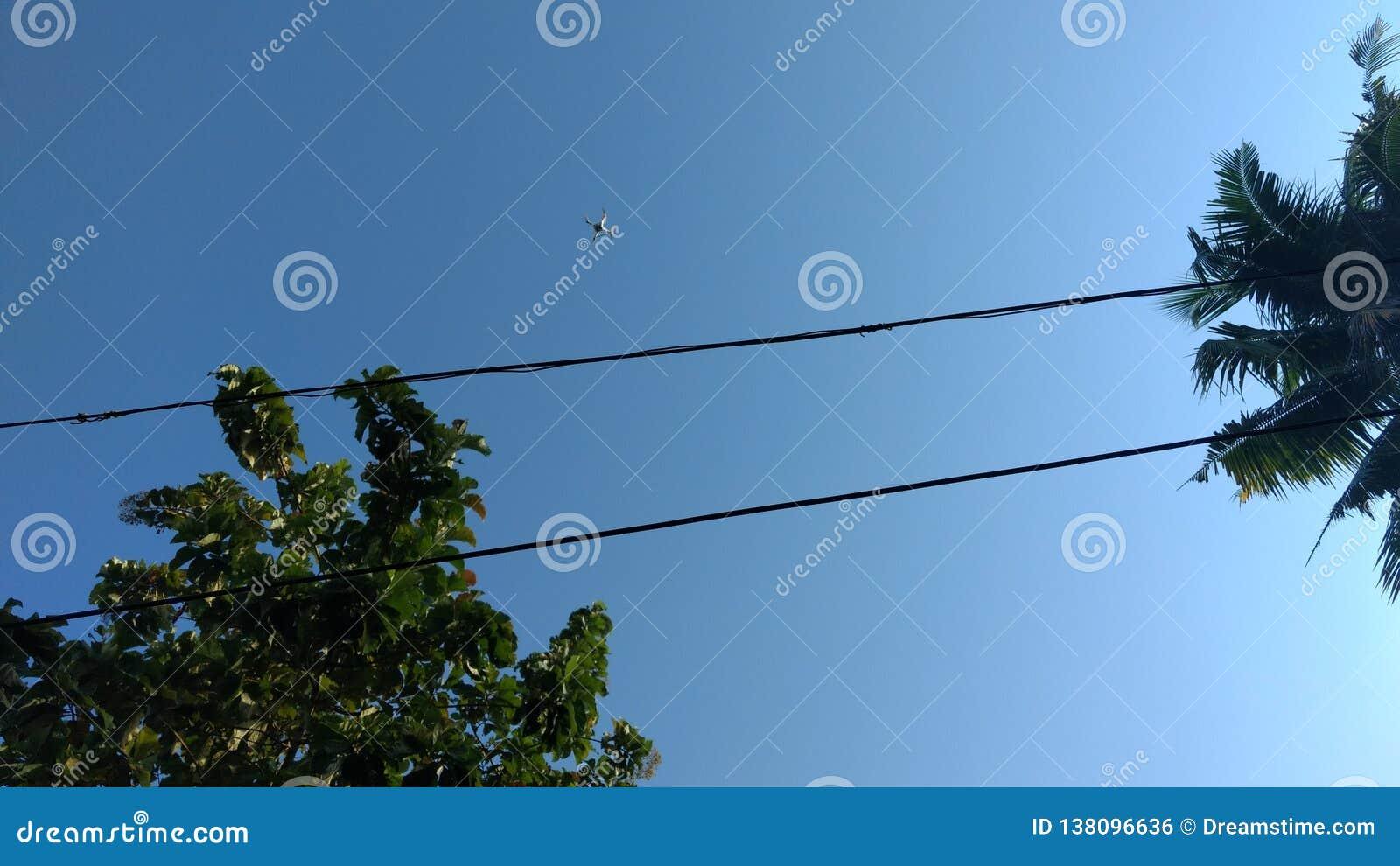 蓝色接触在天空的绿色