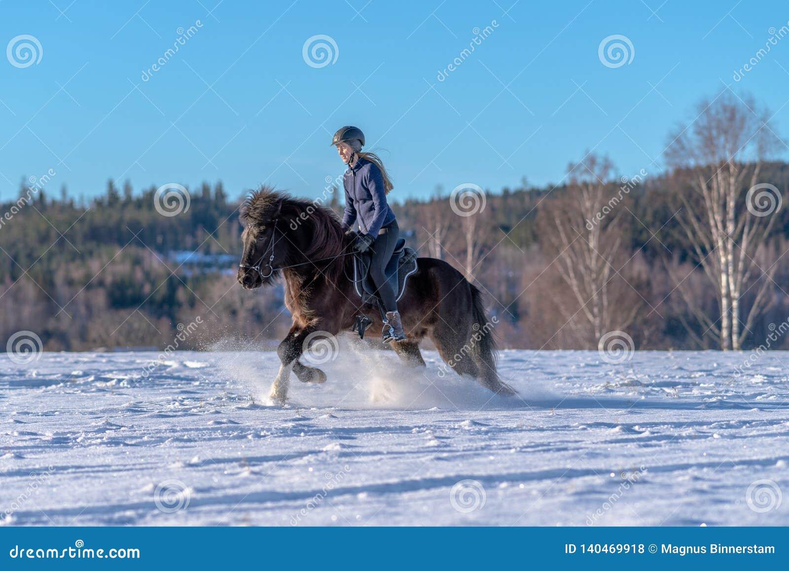 骑她的在深雪和阳光的年轻女人冰岛马