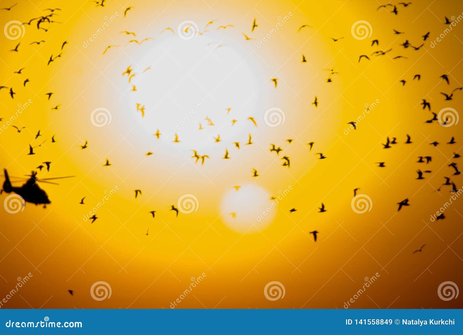鸟和一架直升机的了不起的数字以太阳为背景