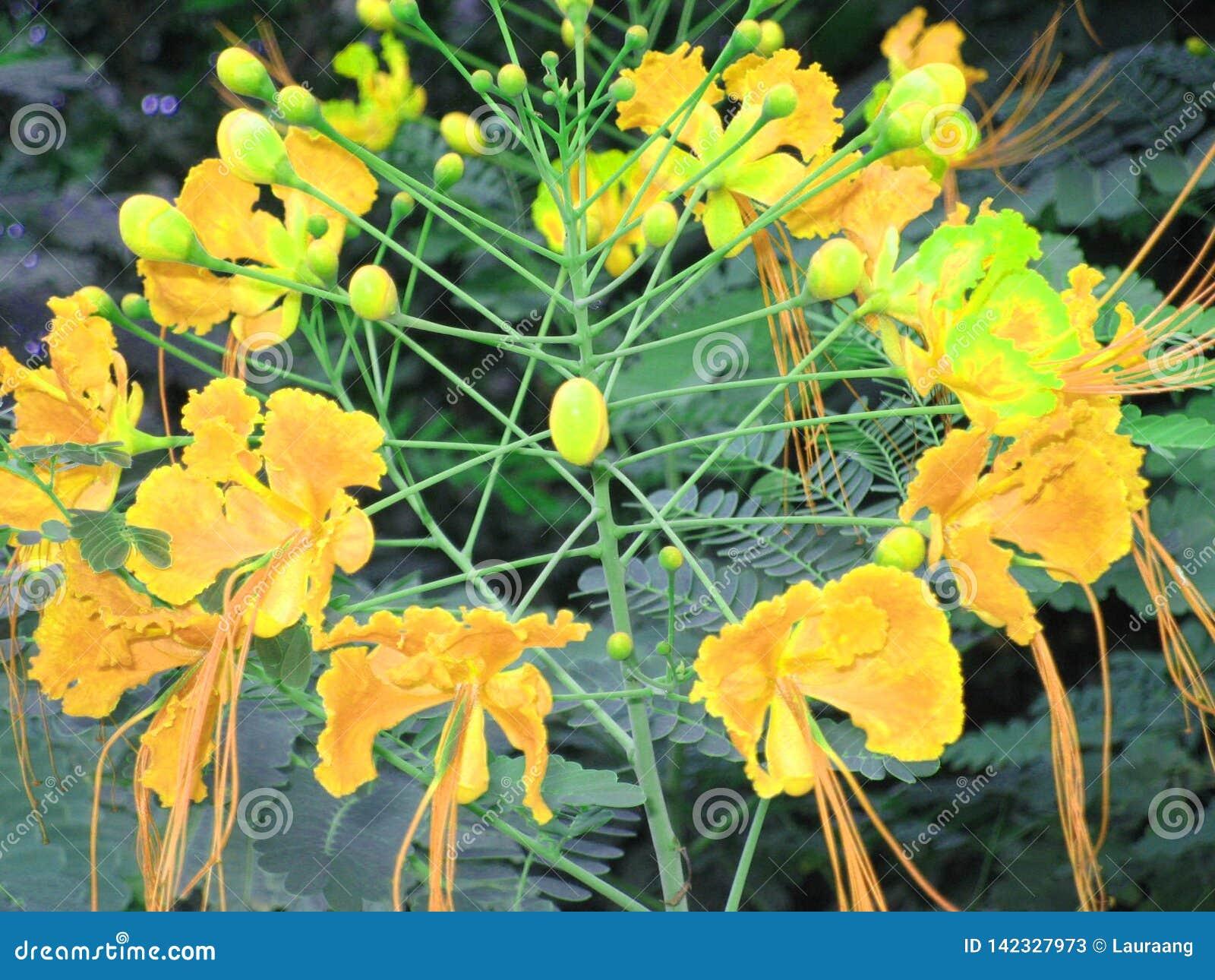 黄色墨西哥的自然秀丽-