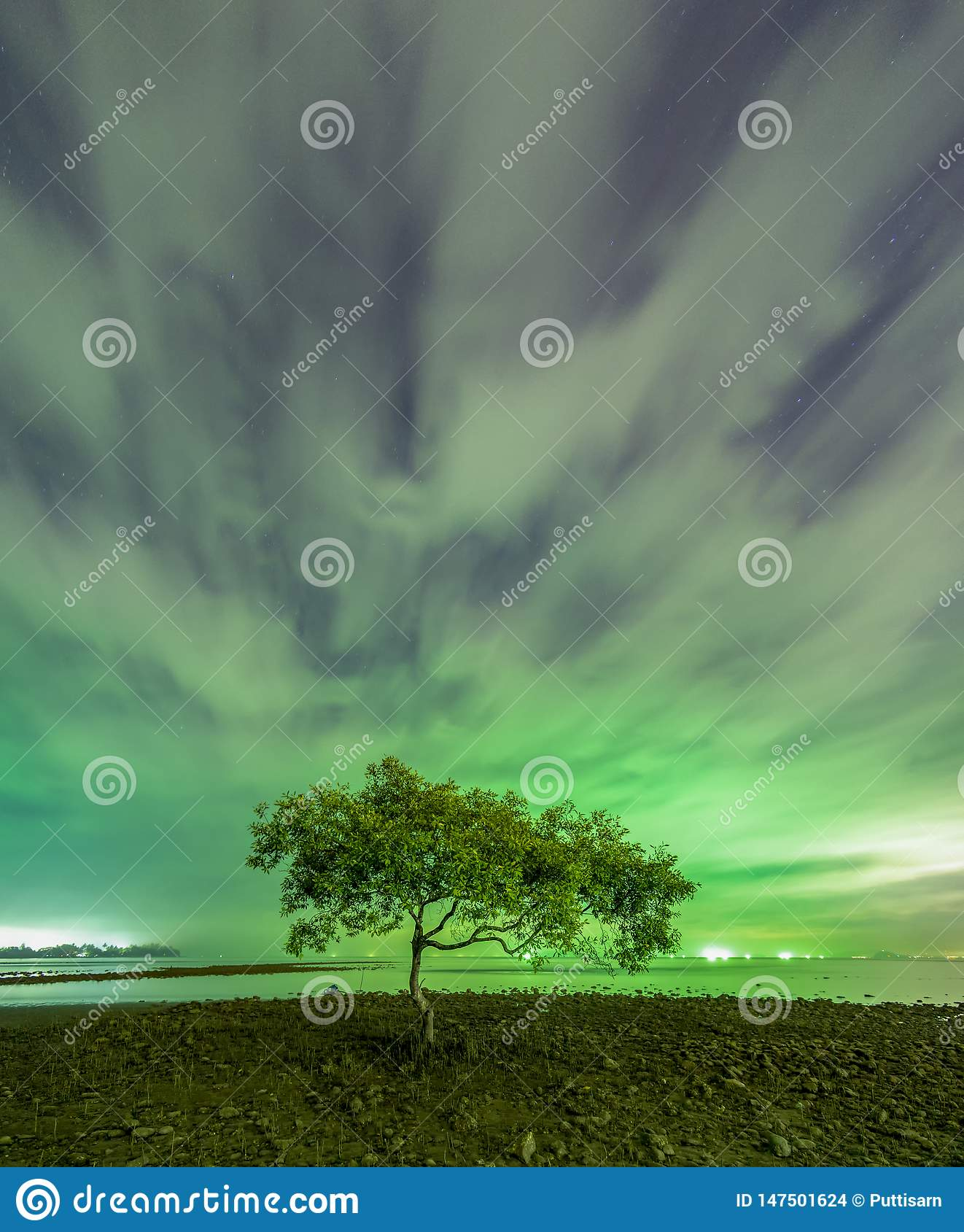 ??n boom bij de mond van Chumphon-Strand, Chumphon-Provincie