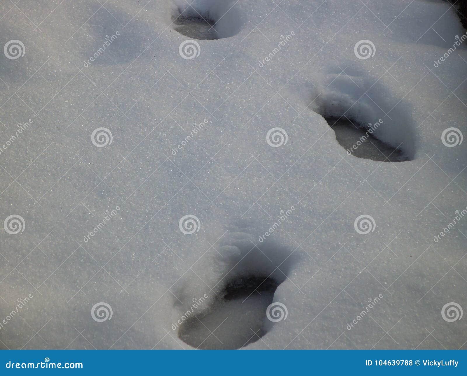 Download Één Reeks Schone Voetafdrukken In De Sneeuwdiegrond In Vancouver Wordt Geschoten Stock Foto - Afbeelding bestaande uit schot, winter: 104639788