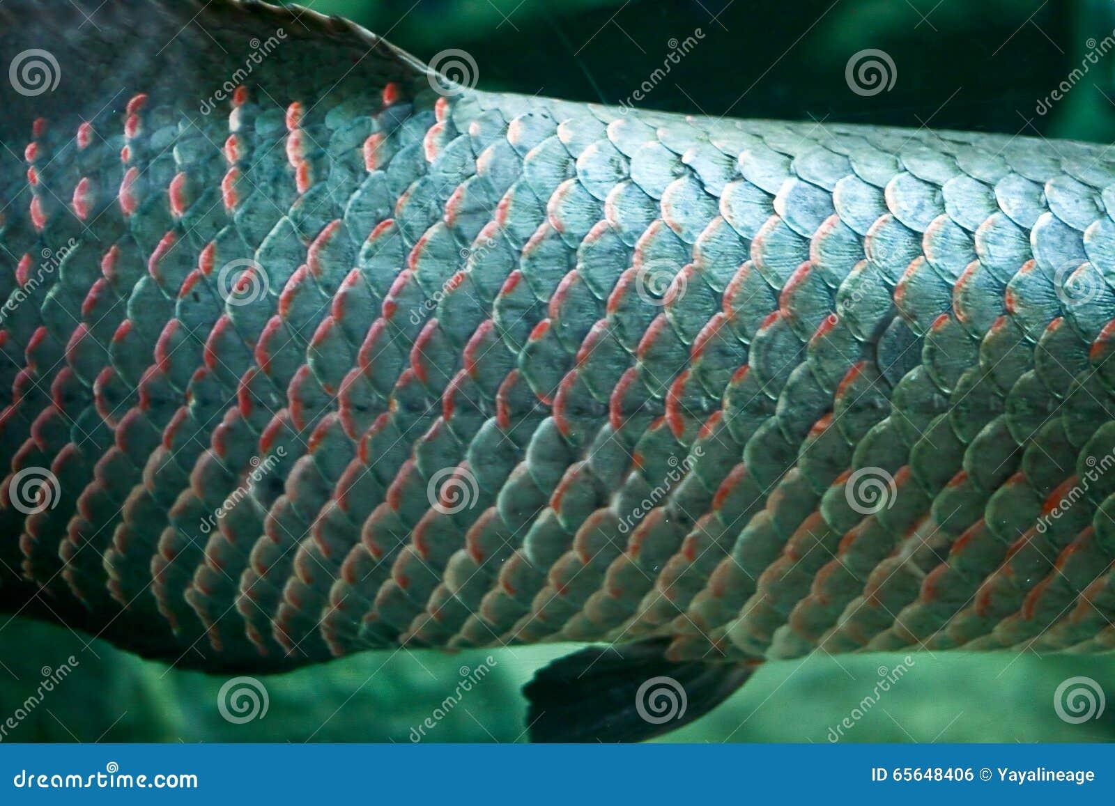 Échelle de poissons
