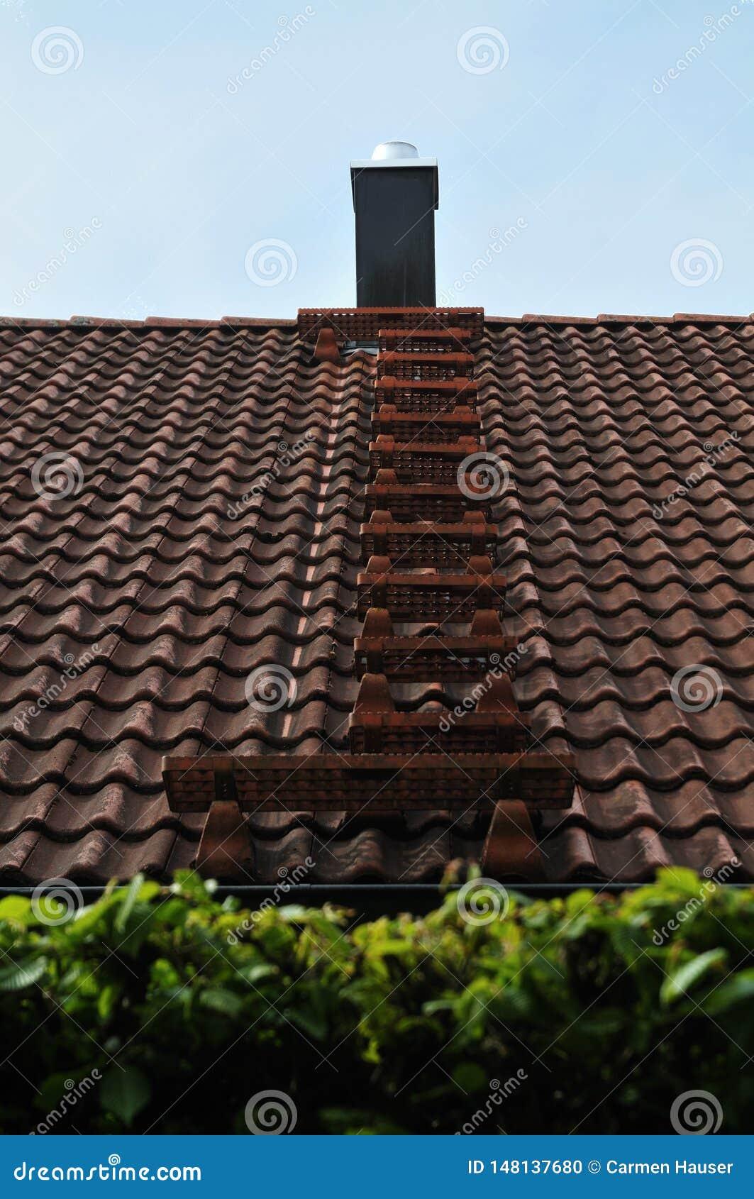 Échelle en métal pour la balayeuse de cheminée sur un toit