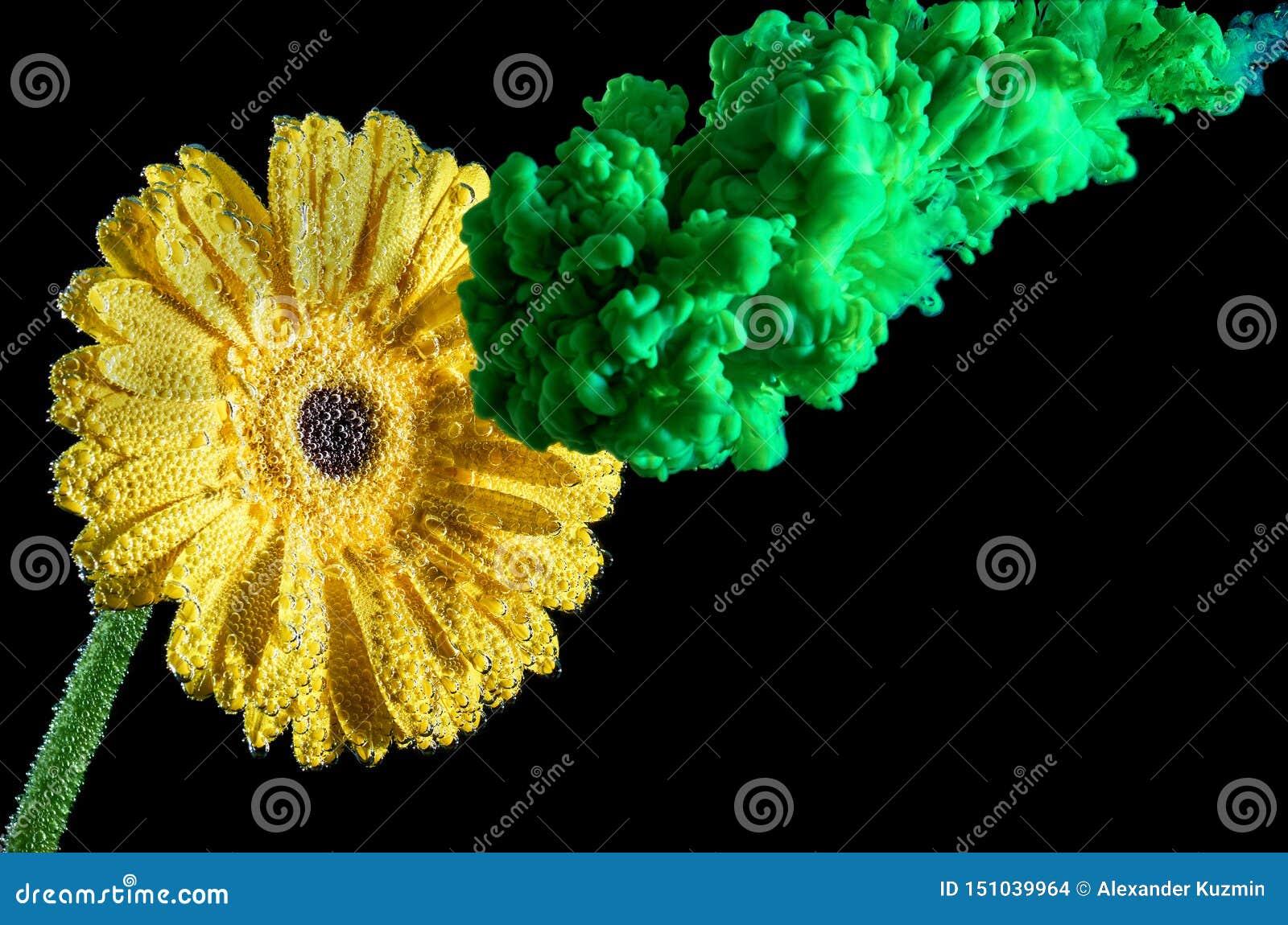 Éclaboussure verte d encre sur la fleur jaune Encre dans l eau avec la fleur D isolement sur le fond noir