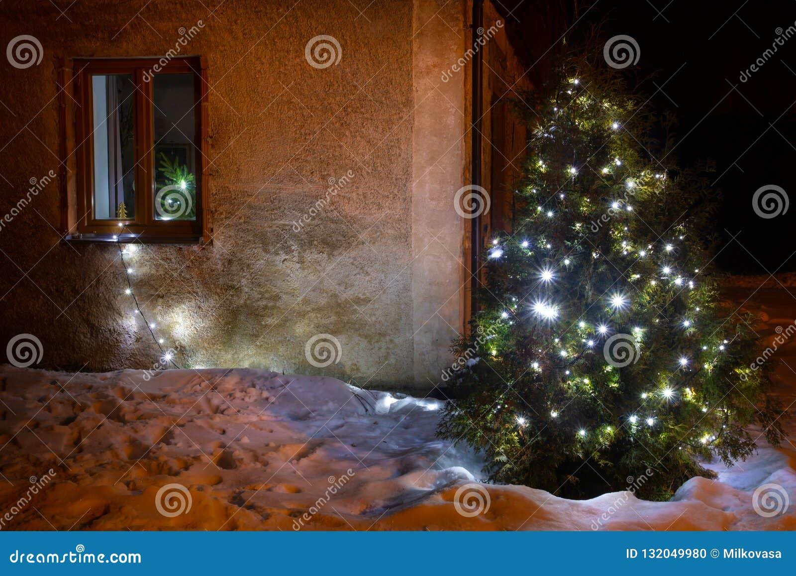 Deco De Noel Dans Le Jardin Éclairage lumineux d'arbre de noël dans le jardin d'hiver