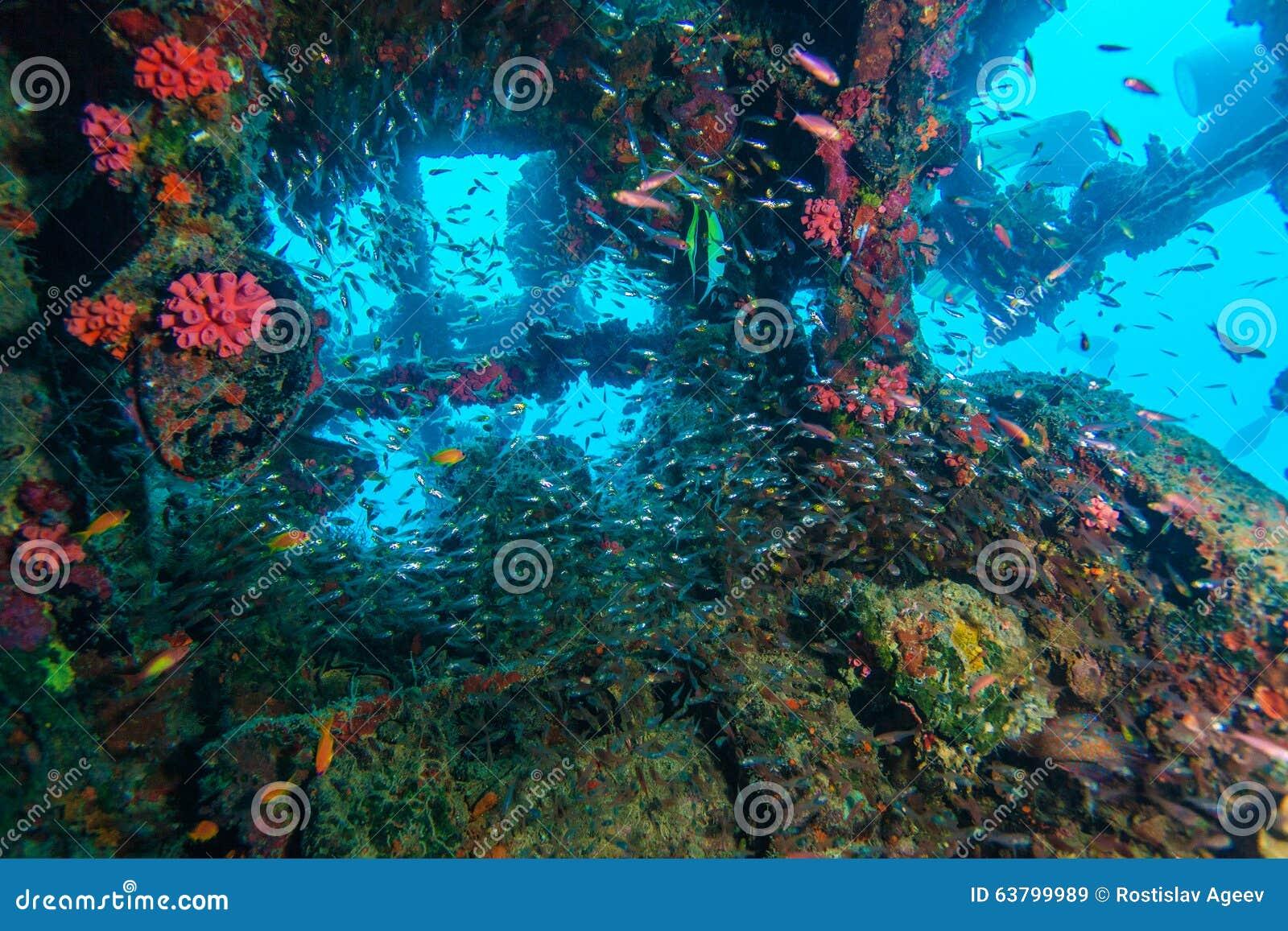 École des poissons en verre à l intérieur du naufrage